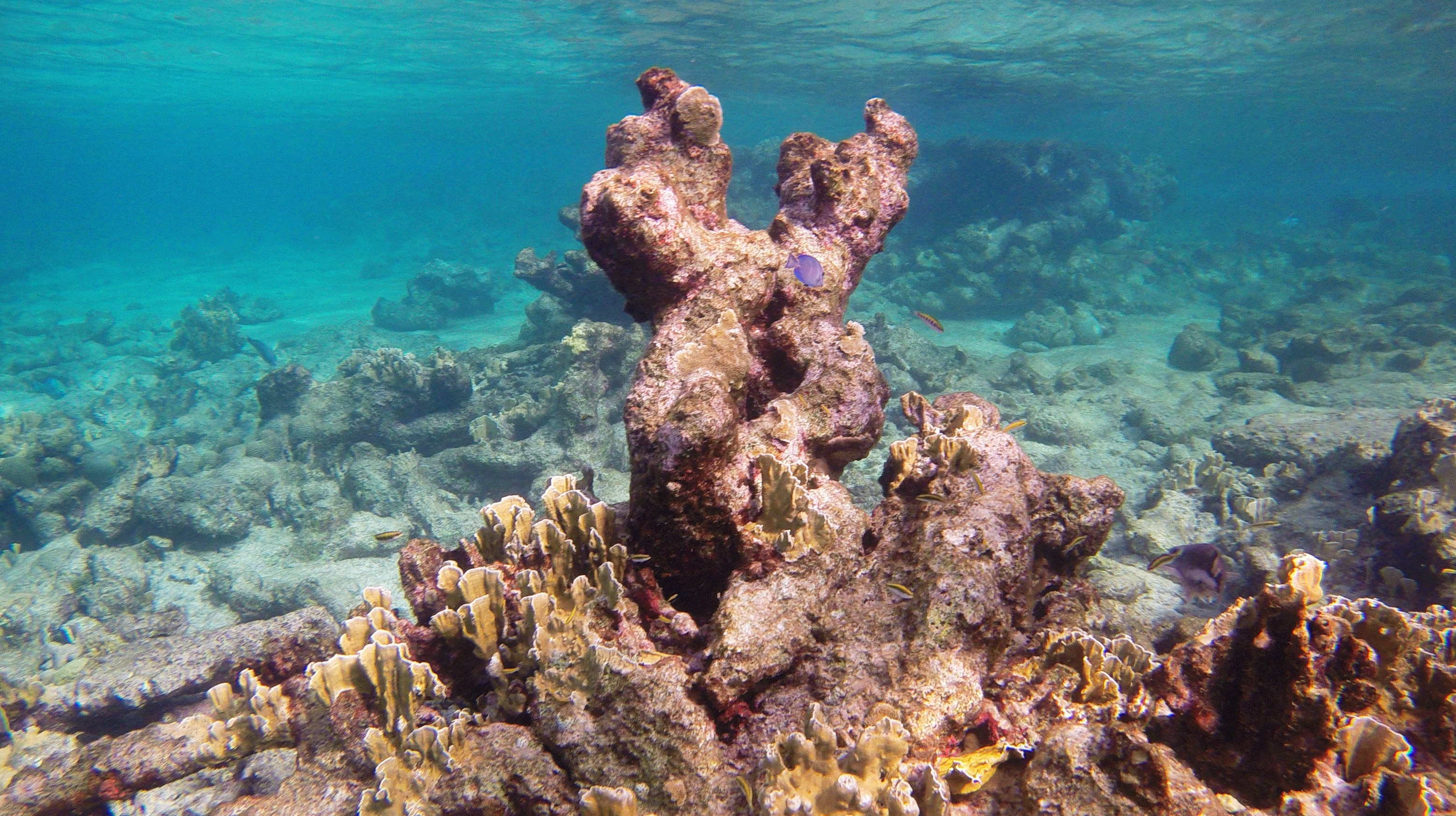 File:Snorkeling Karpata Reef, Bonaire (12842383794).jpg - Wikimedia ...