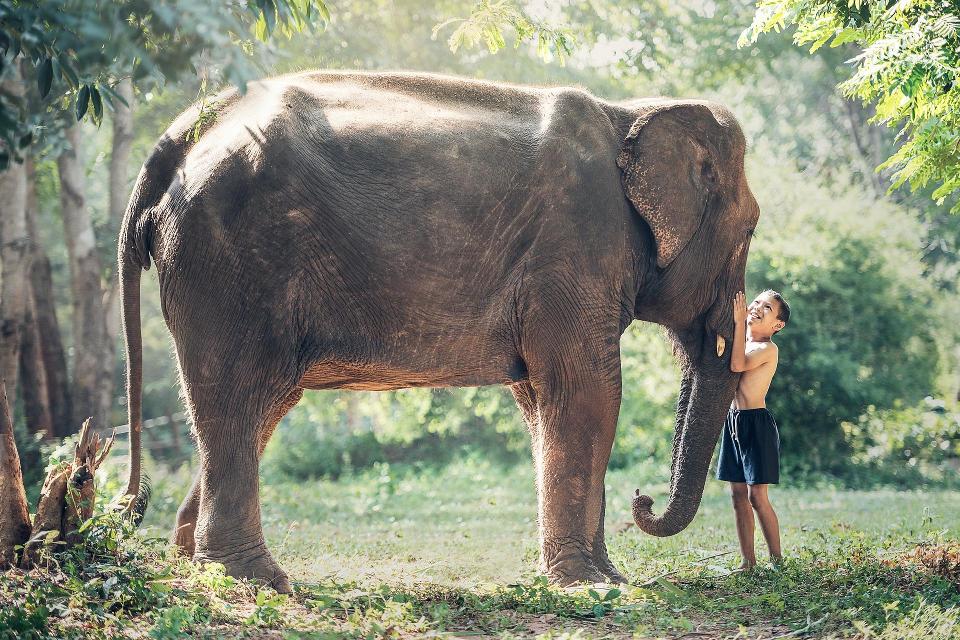 Kid with the elephant photo
