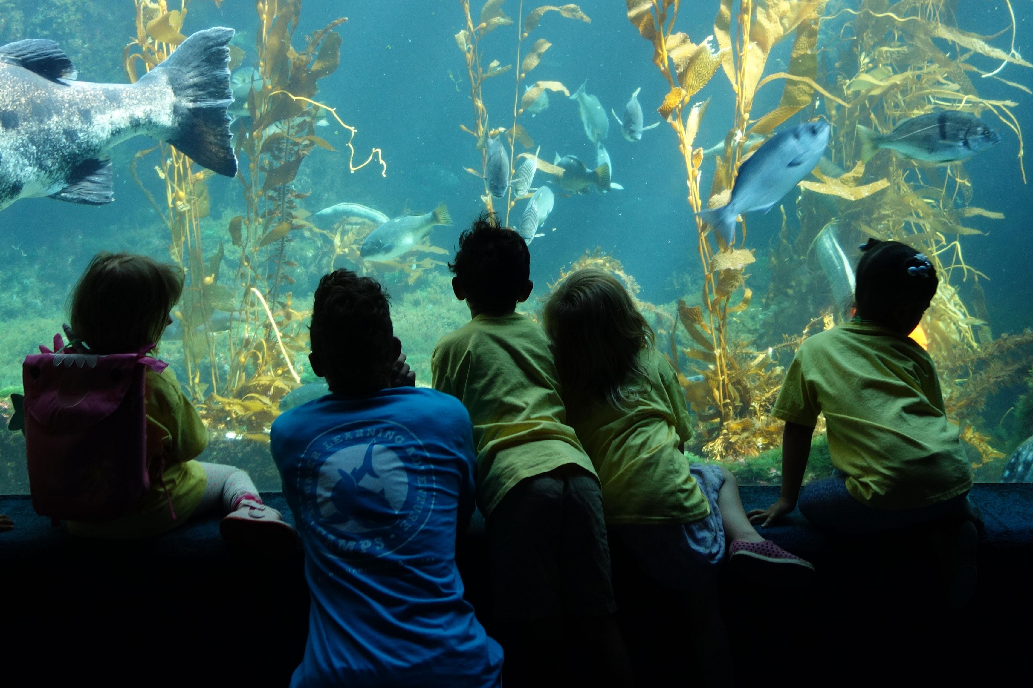Children's Birthday Parties | Birch Aquarium at Scripps