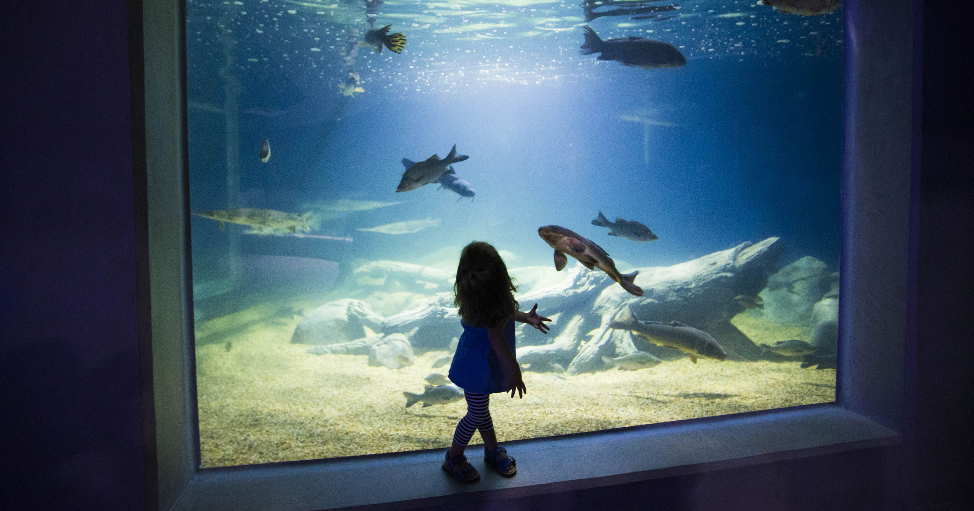 OdySea Aquarium in Scottsdale: 8 tips, things to know before you ...