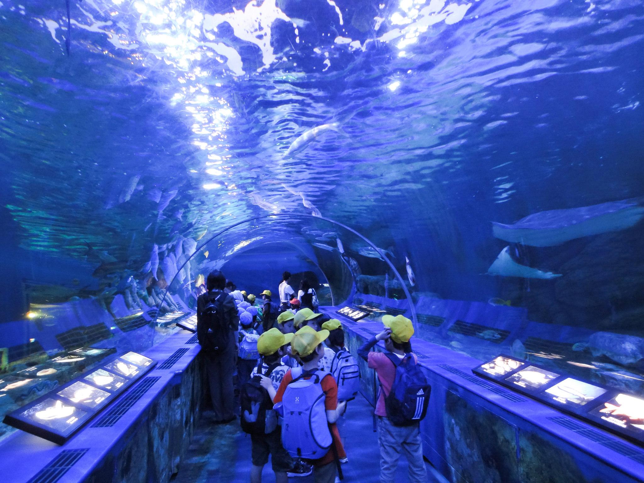 10 Best Aquariums In and Around Tokyo to Make Everyone | Hub Japan