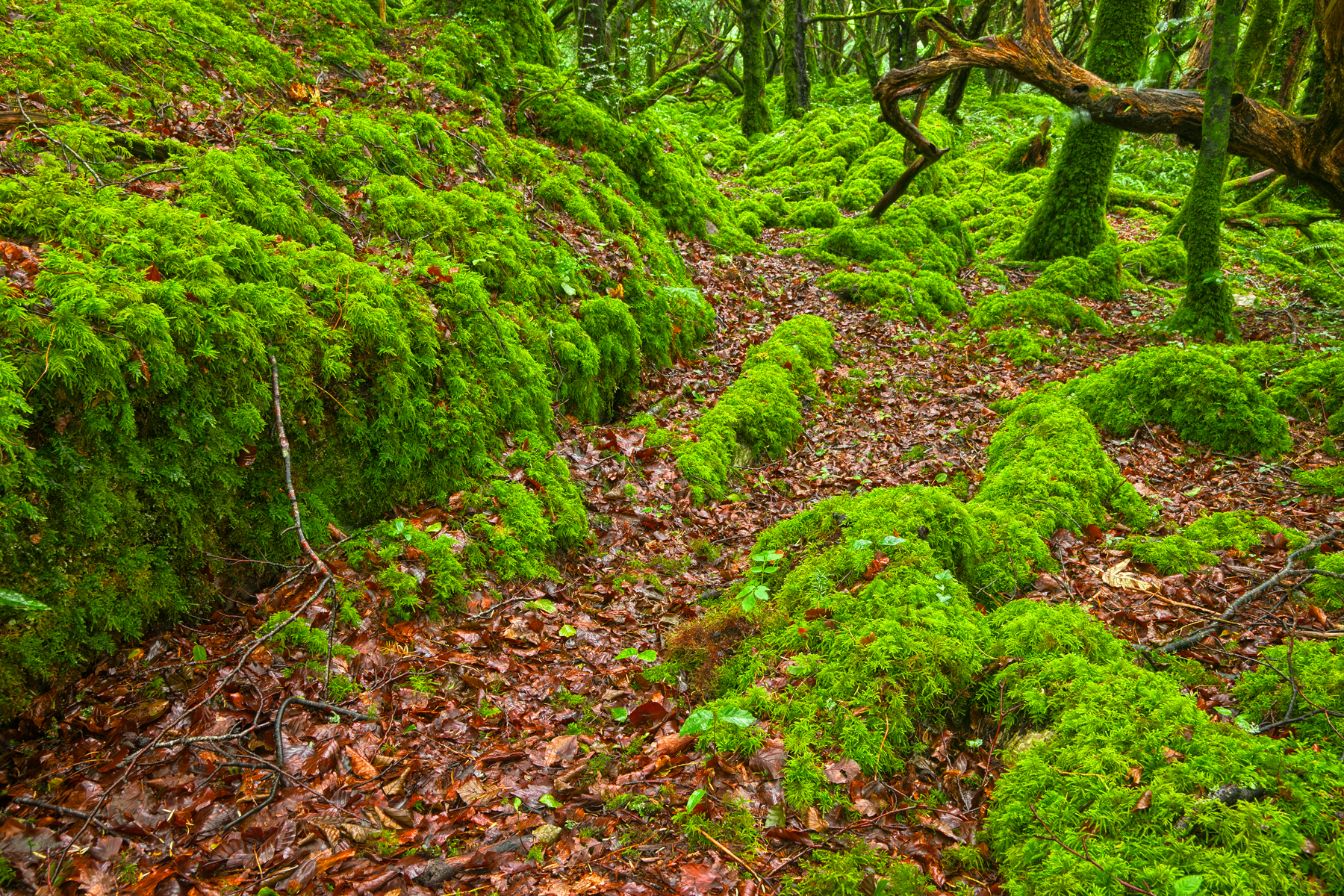 Killarney forest - hdr photo