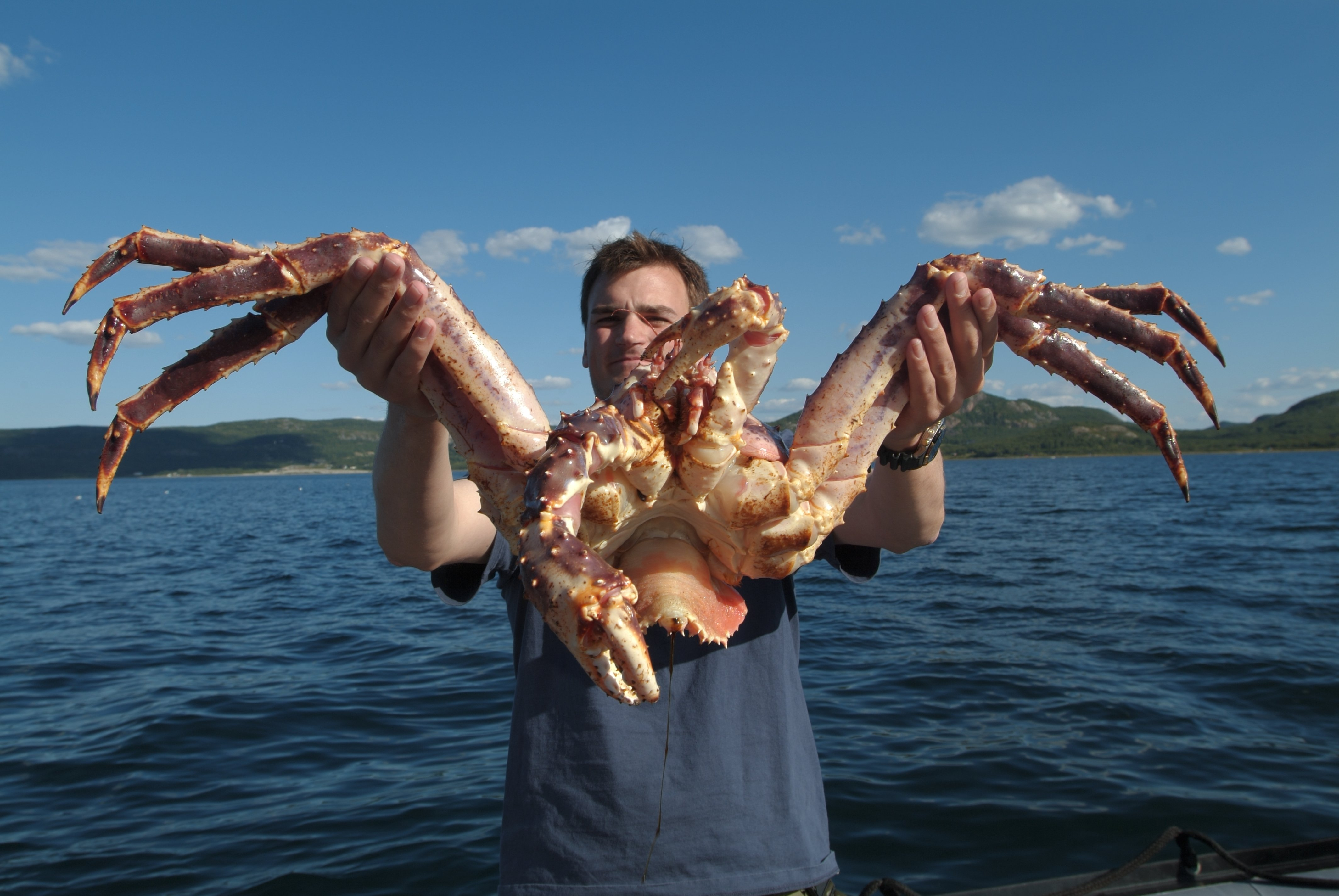 King Crabs - tasty monsters