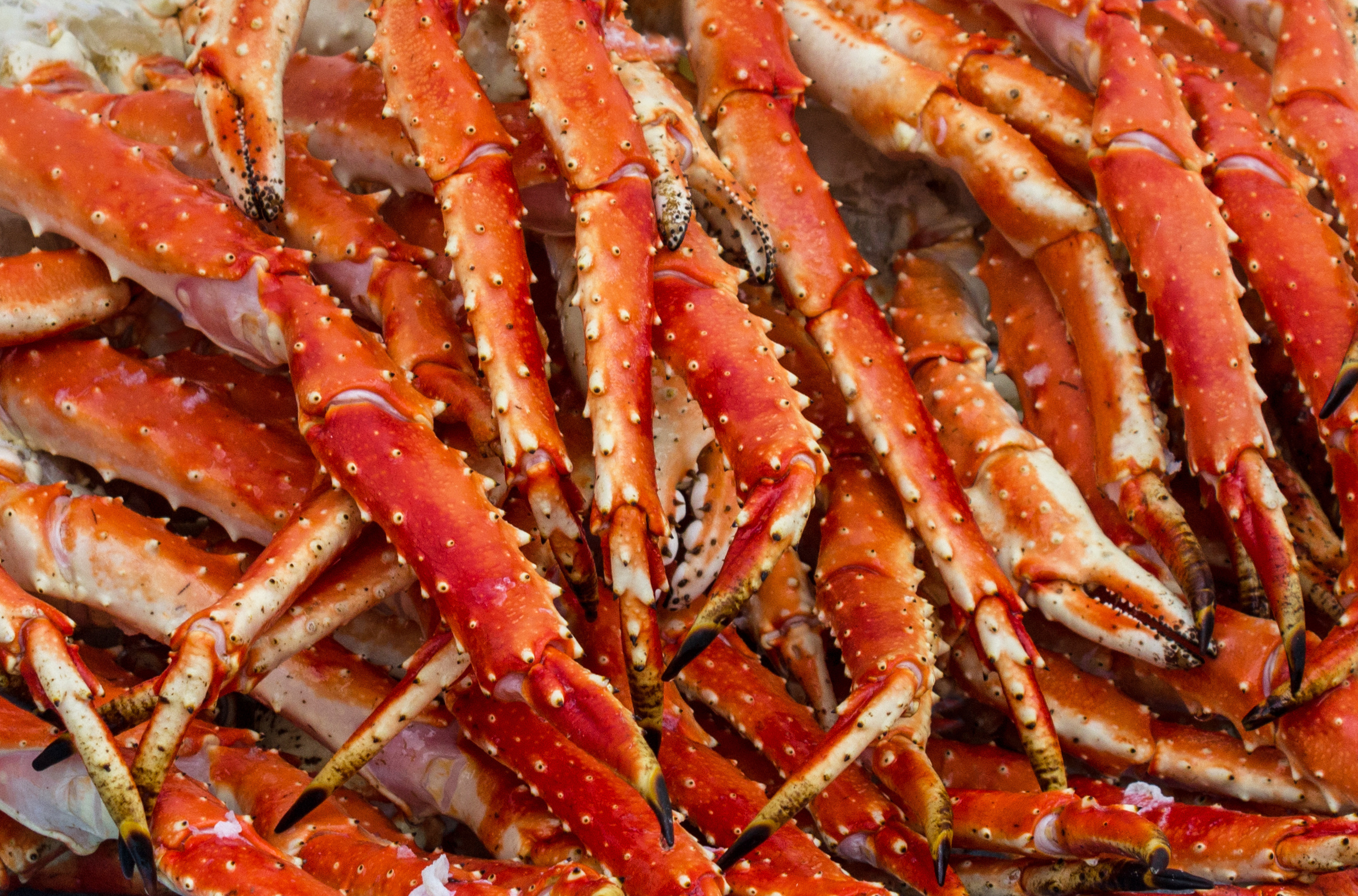 Giant Alaskan King Crab Legs by the pound