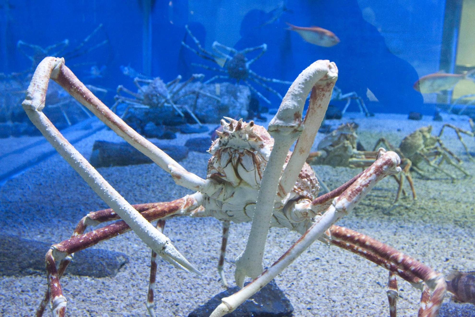 November 19, 2014: King Crabs – SCFoW
