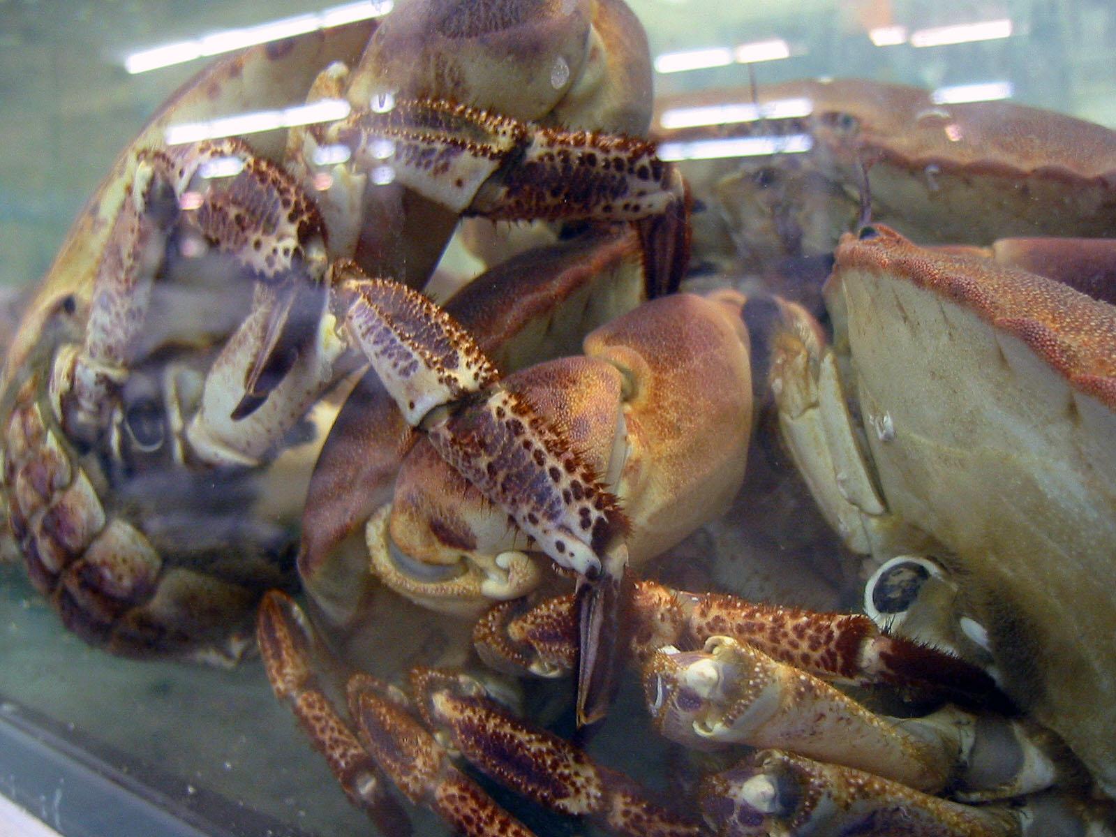 King crabs, Salt, Swim, Water, King, HQ Photo
