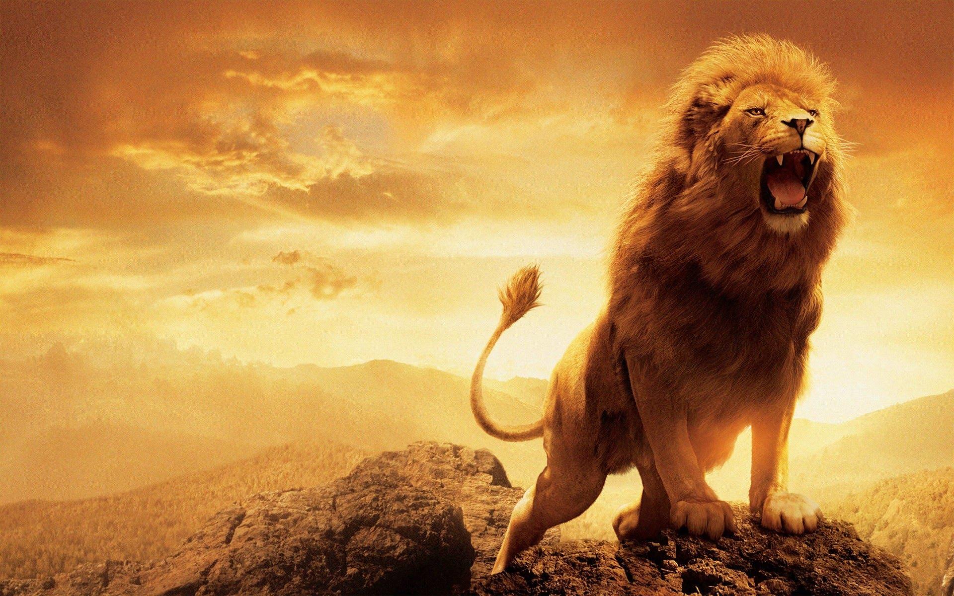King of jungle photo
