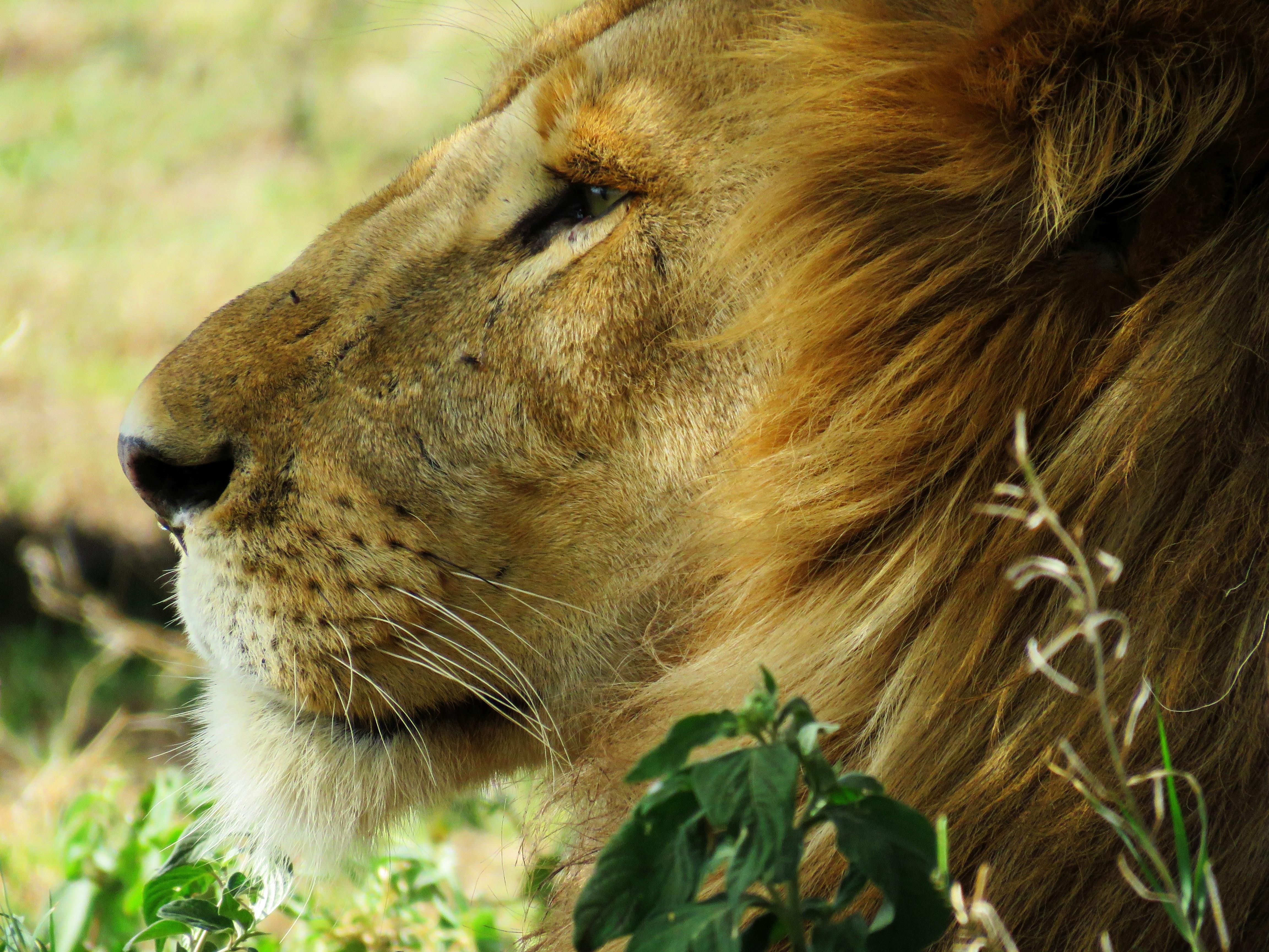 King, Animal, Fast, Fierce, Jungle, HQ Photo