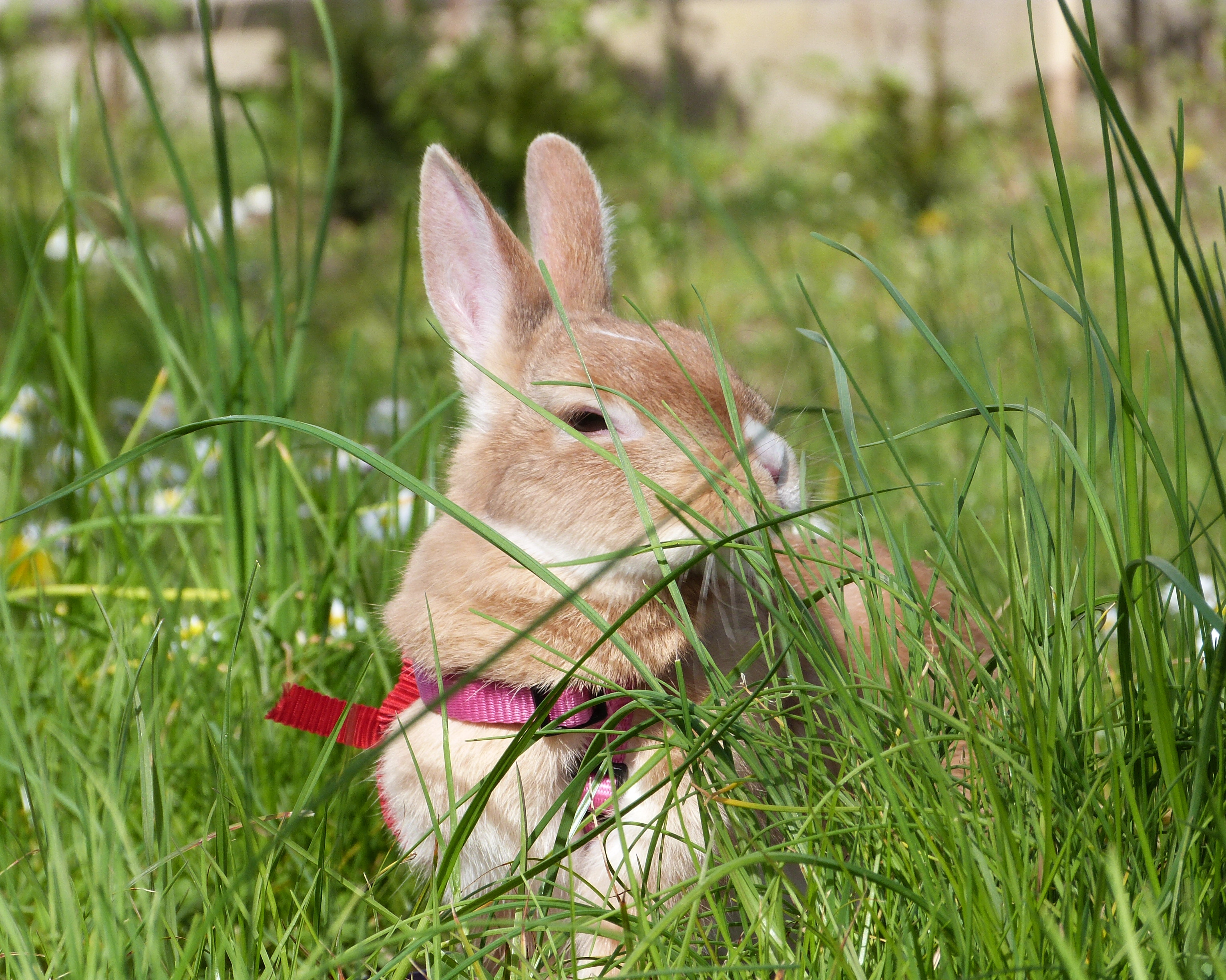 Kirby in the garden, Animal, Orange, Rabbit, Purple, HQ Photo