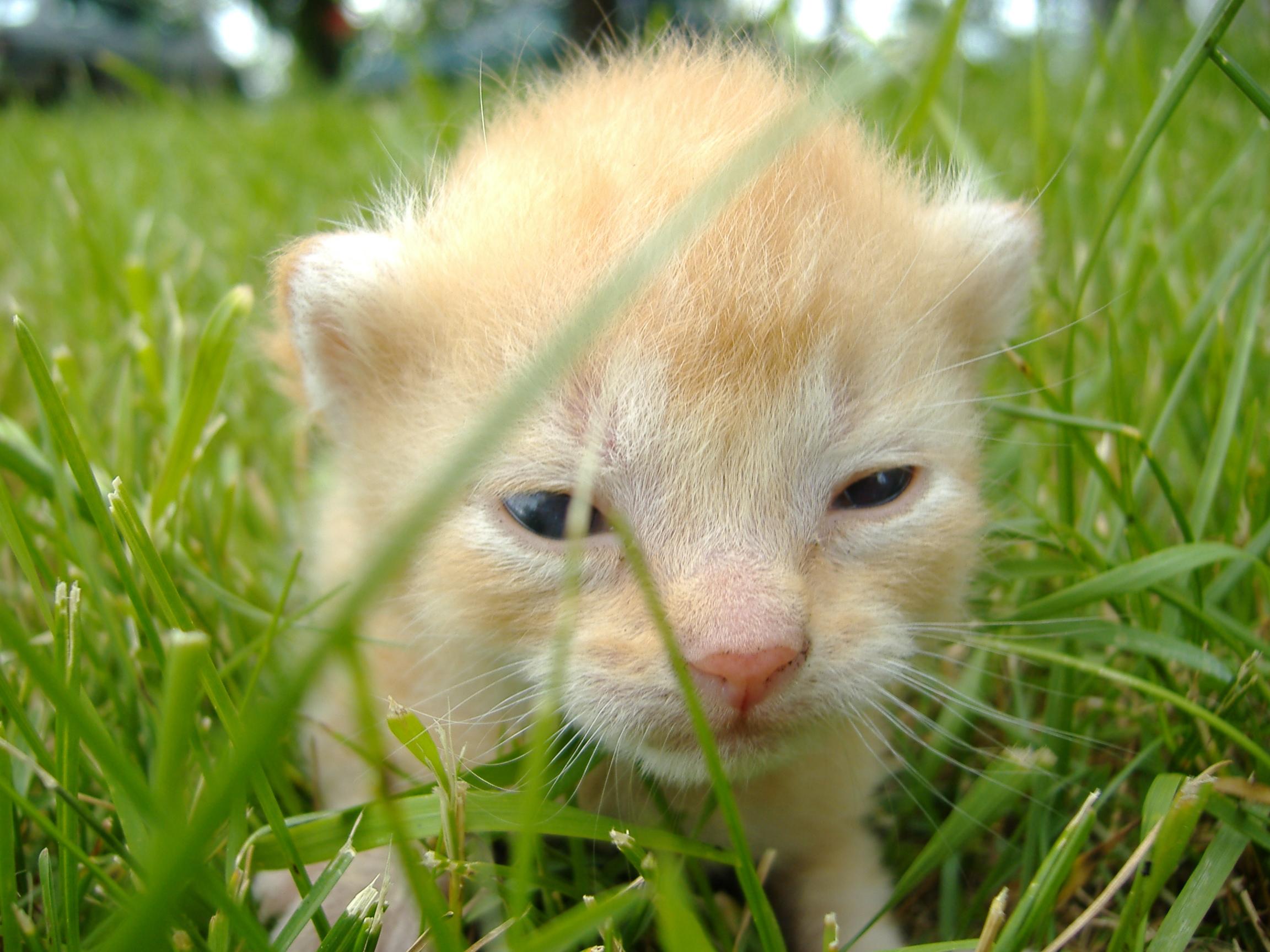 Kitten - Wikipedia