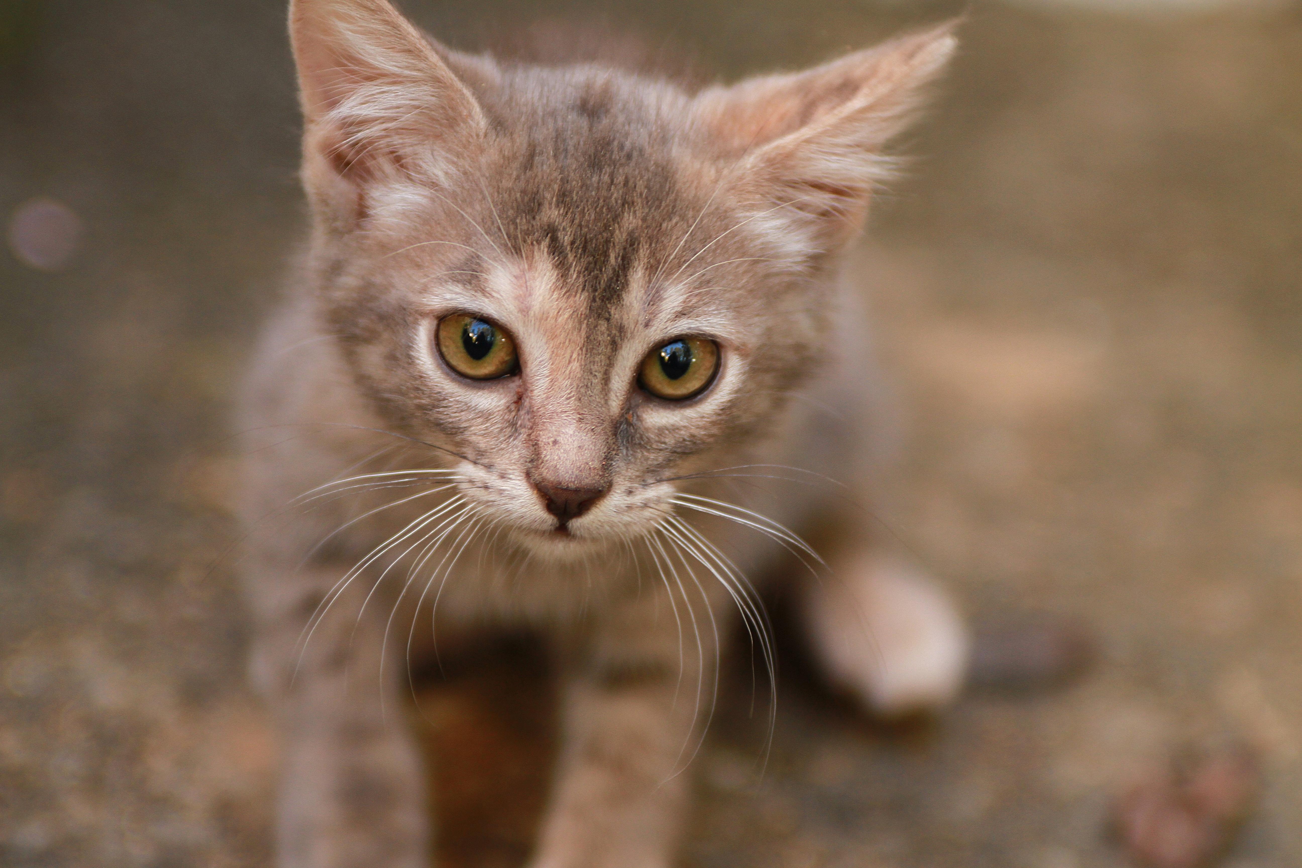 Kitten, Animal, Cat, Friend, Loyal, HQ Photo