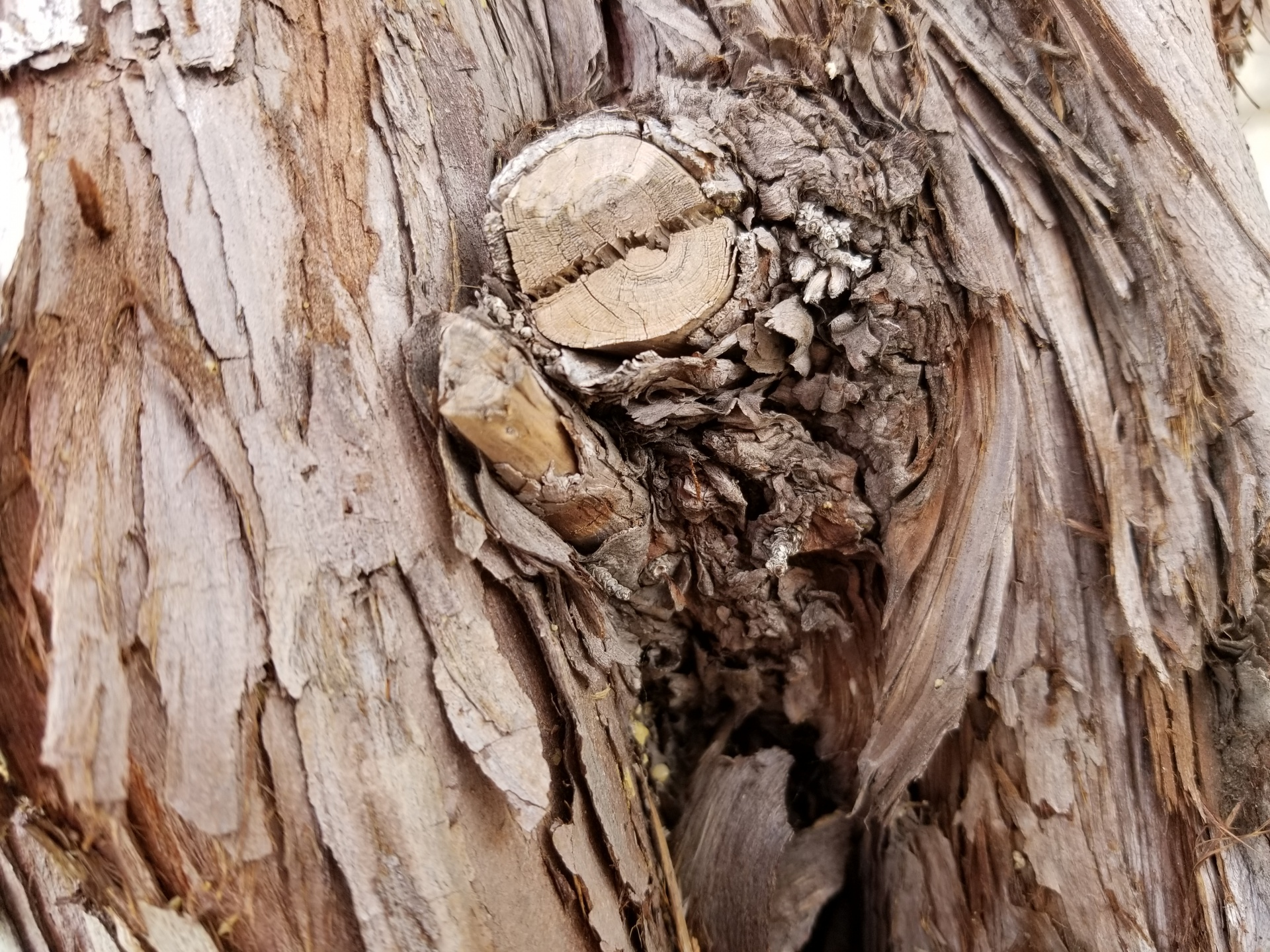 Knot Hole Free Stock Photo - Public Domain Pictures