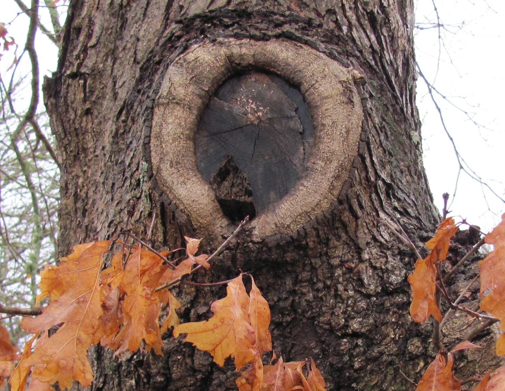 Secrets of Deep Seeing (Part 2)The Knothole: Mandala in the Oak ...