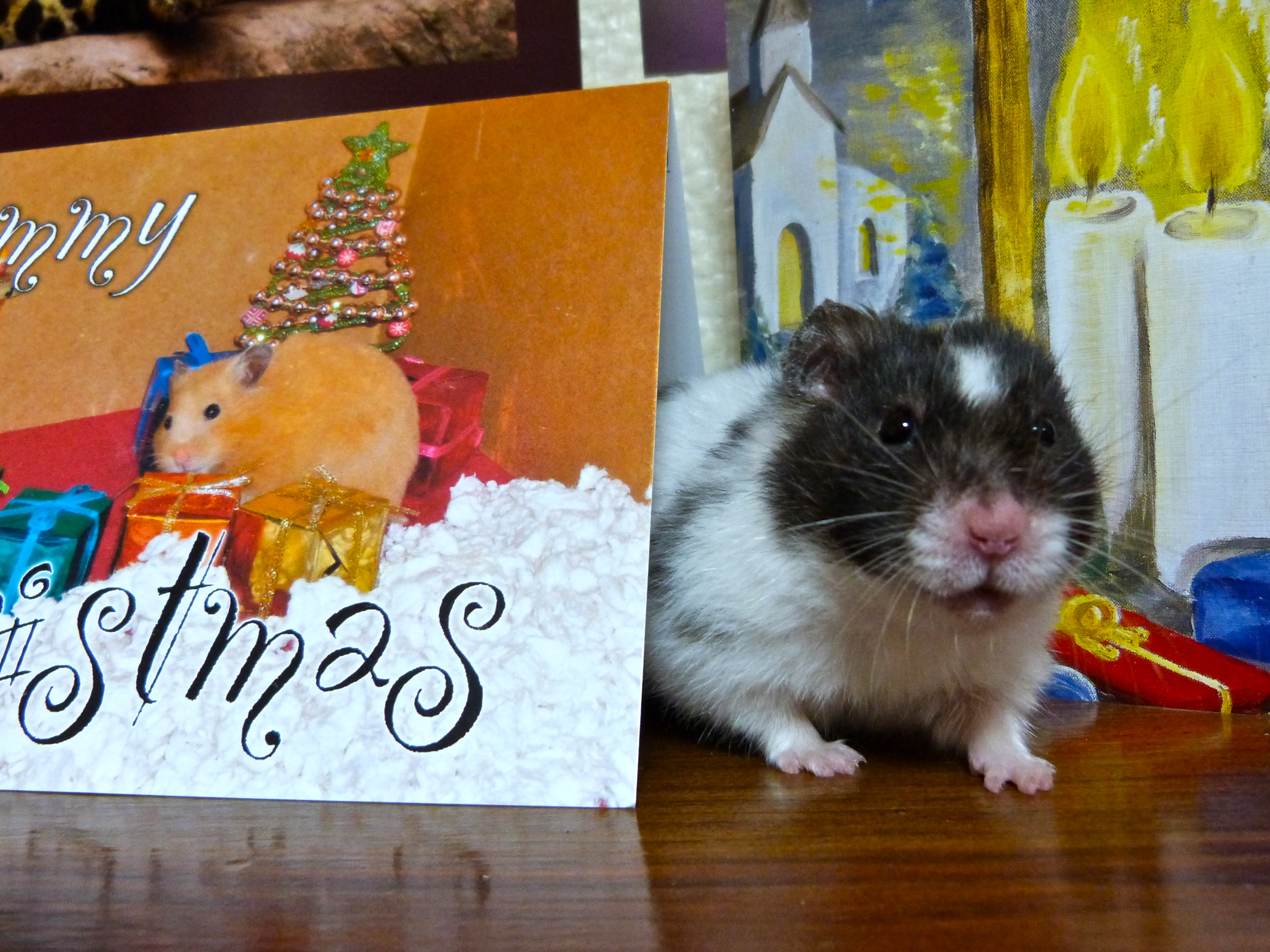 Kodi and the holiday cards photo