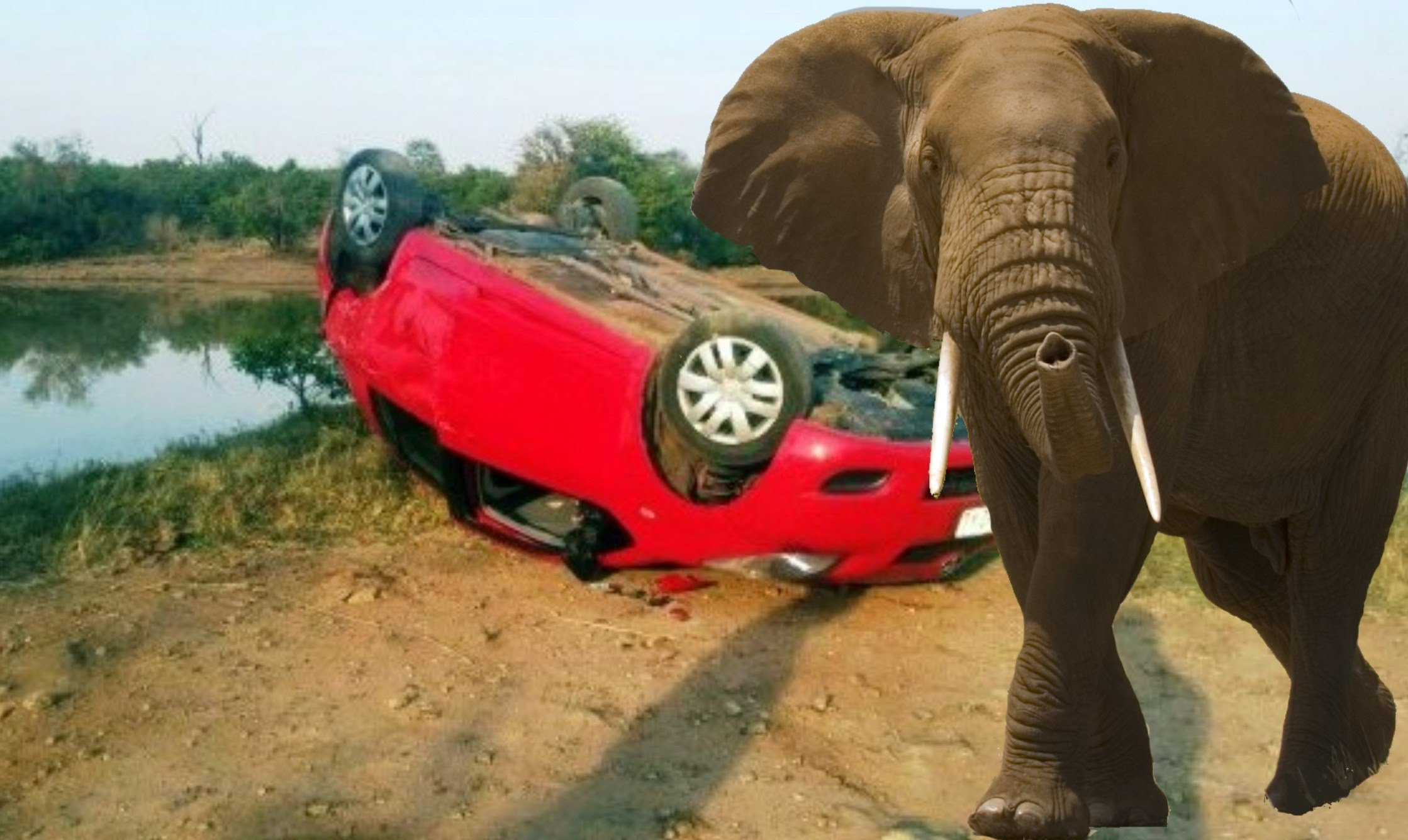 Elephant Attacks And Flips Car in Kruger Park. Latest Attack. - YouTube