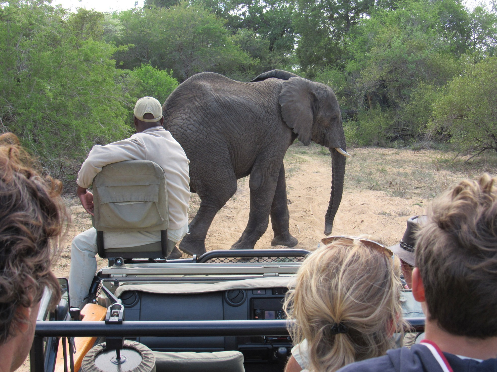 When is the best time of year for a Kruger Park safari? | Safari365