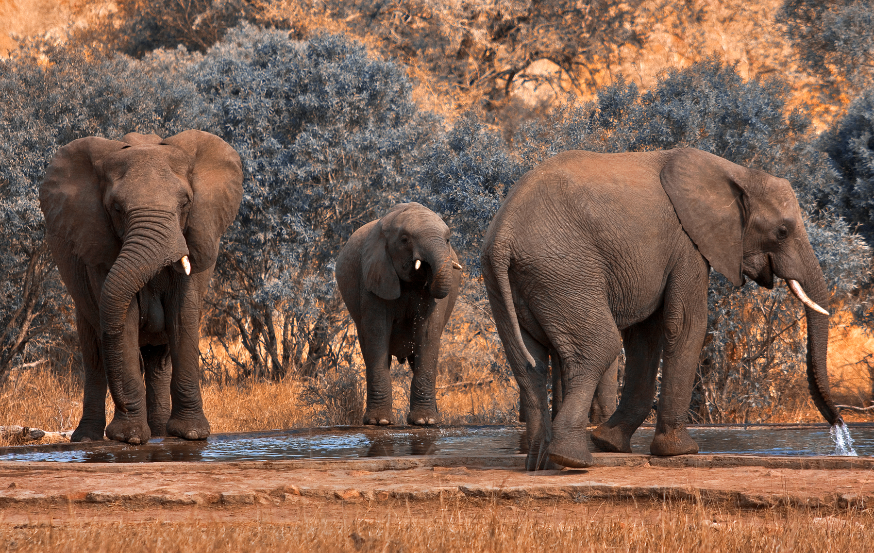 Kruger Park Elephants, Res, Stock, South, Side, HQ Photo