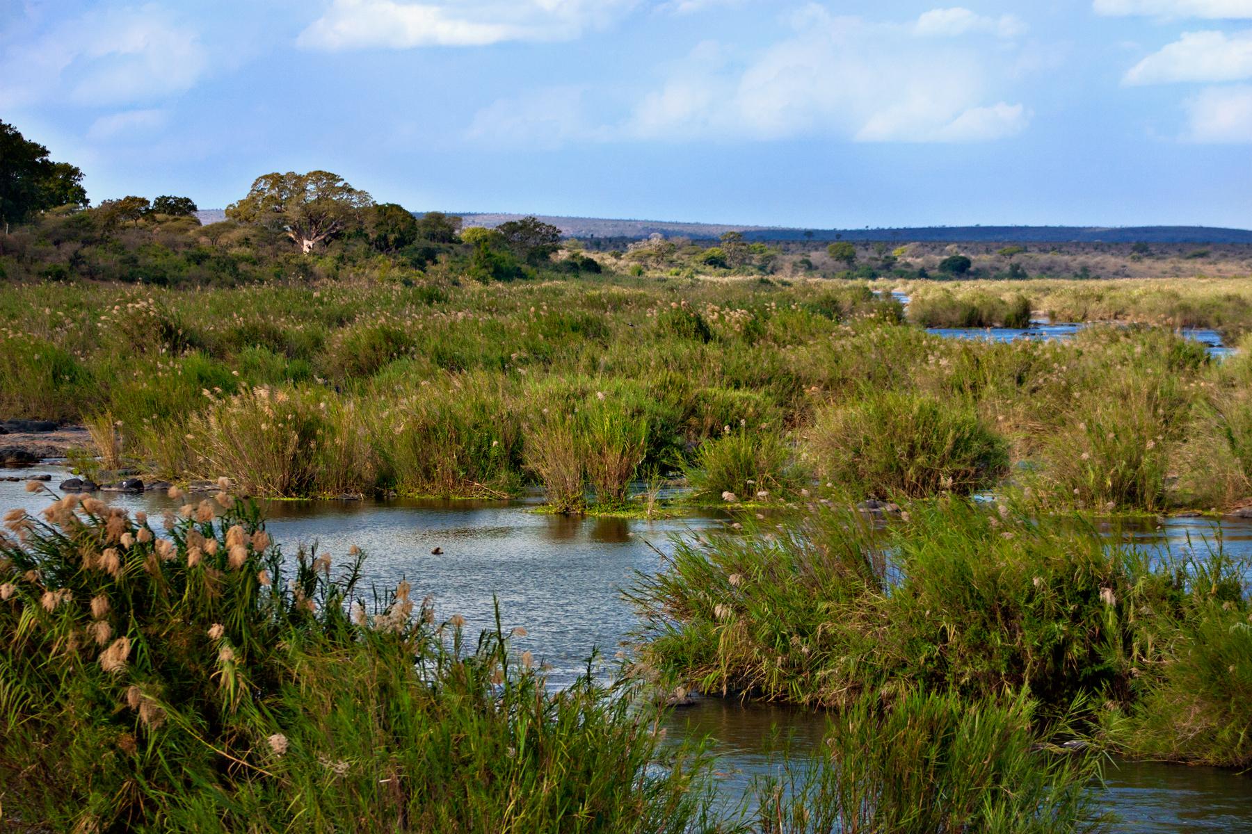 Kruger park landscape photo
