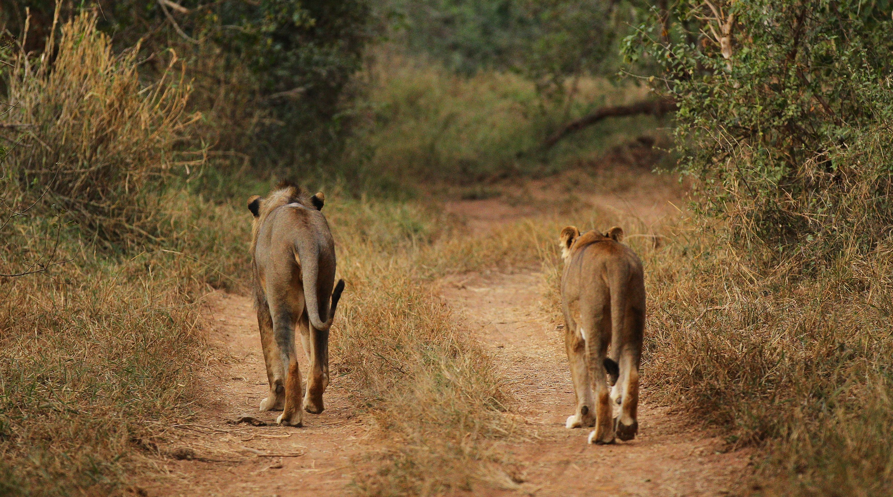 Suspected Poacher Eaten By Lions In South Africa | 90.1 FM WABE
