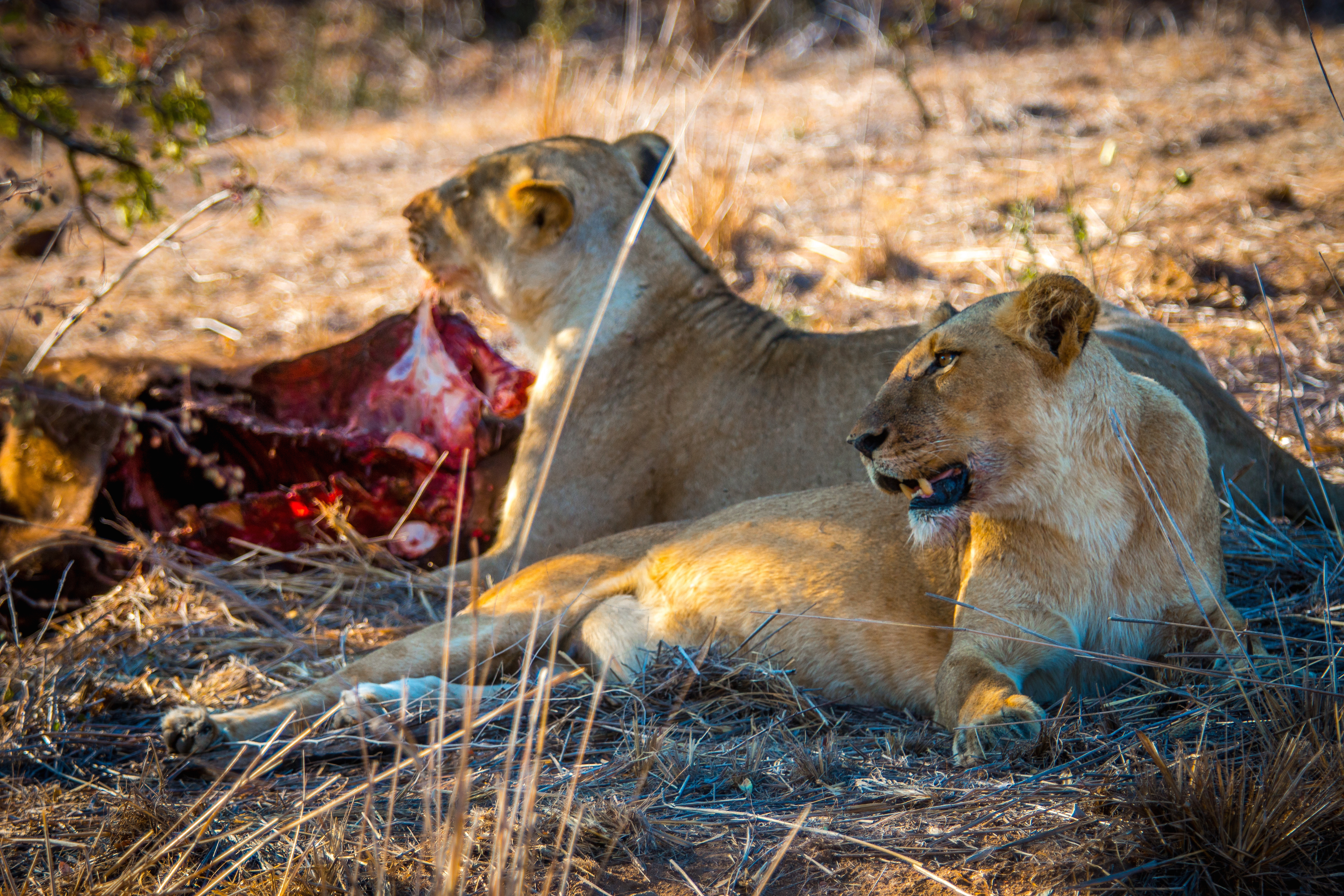 How to Get the Most For Your Kruger National Park Entrance Fee