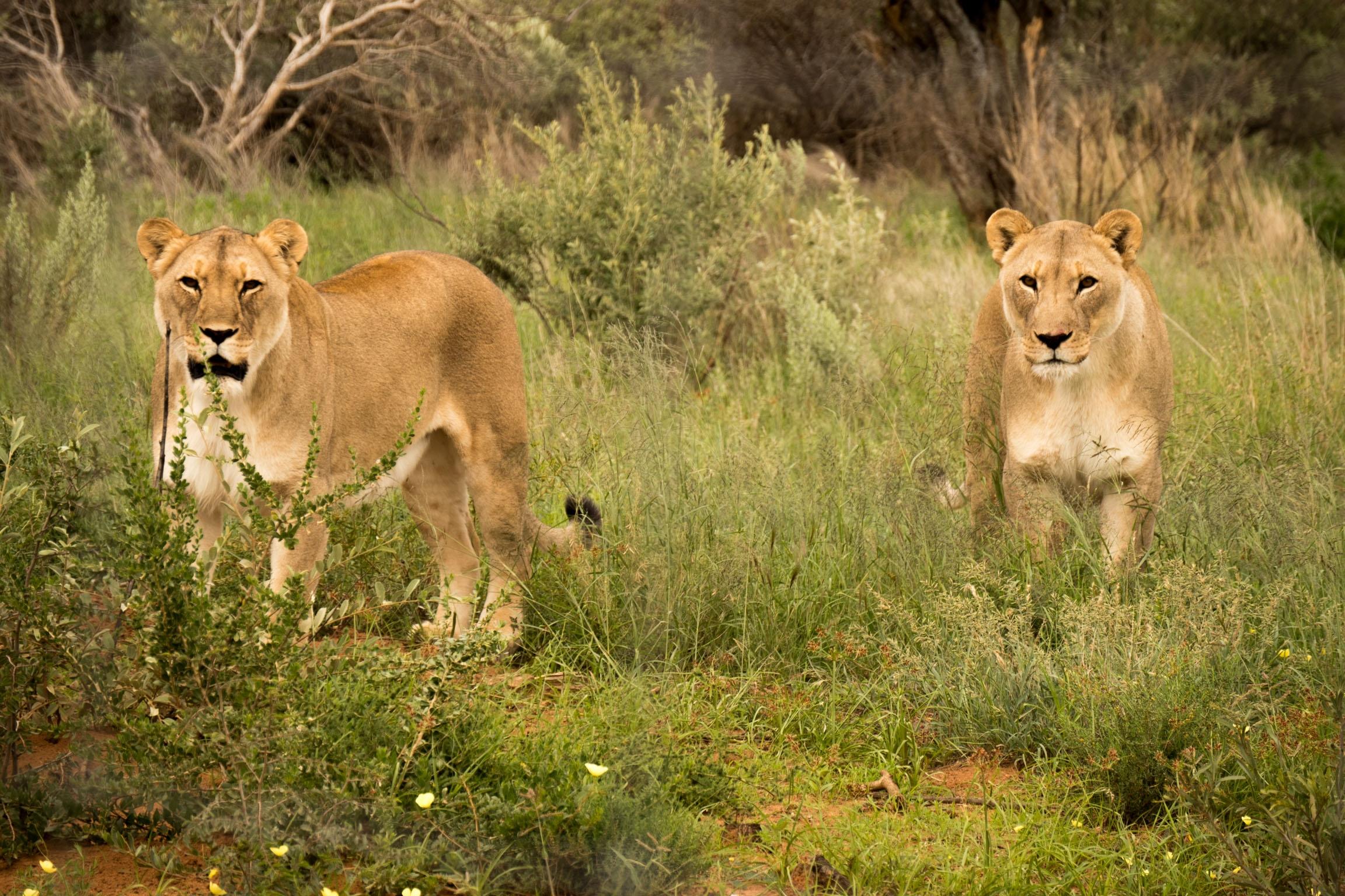 Budget Namibia Lodge Safari - Namibia Highlights Safari
