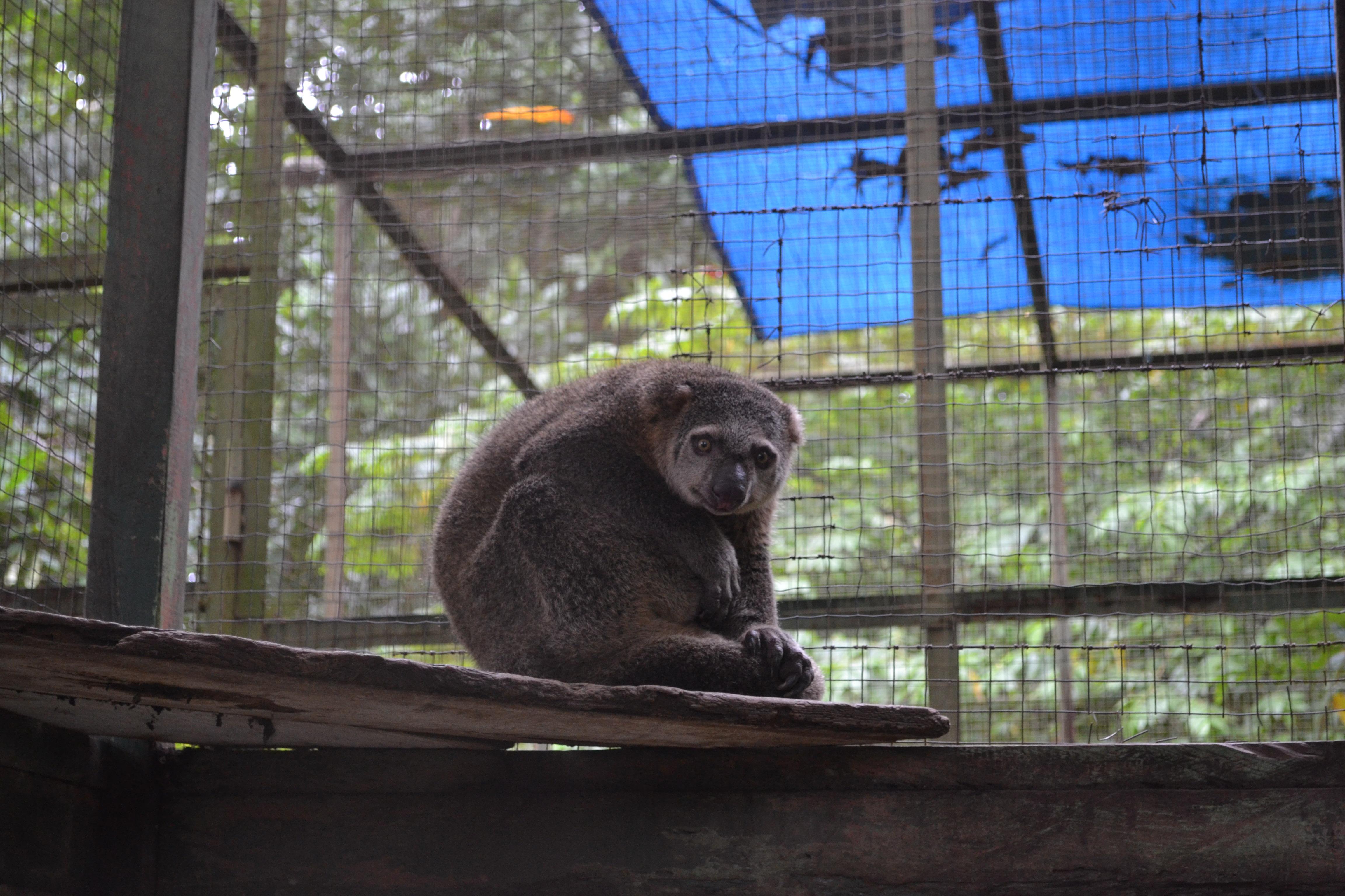 Kuse Mammal, Animal, Conservation, Mammal, Zoo, HQ Photo