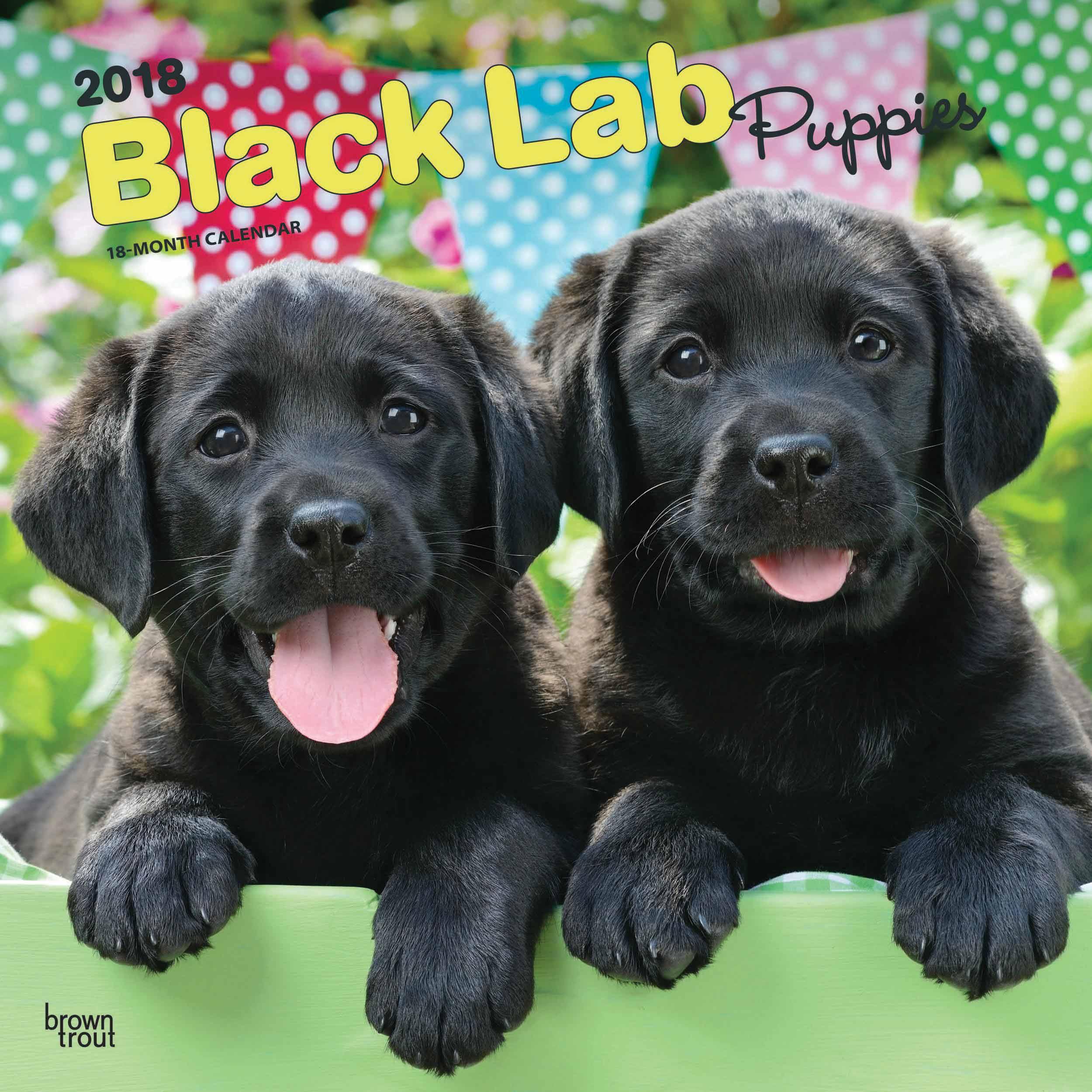 Labrador Retriever Puppies Black Calendar 2018 - Calendar Club UK
