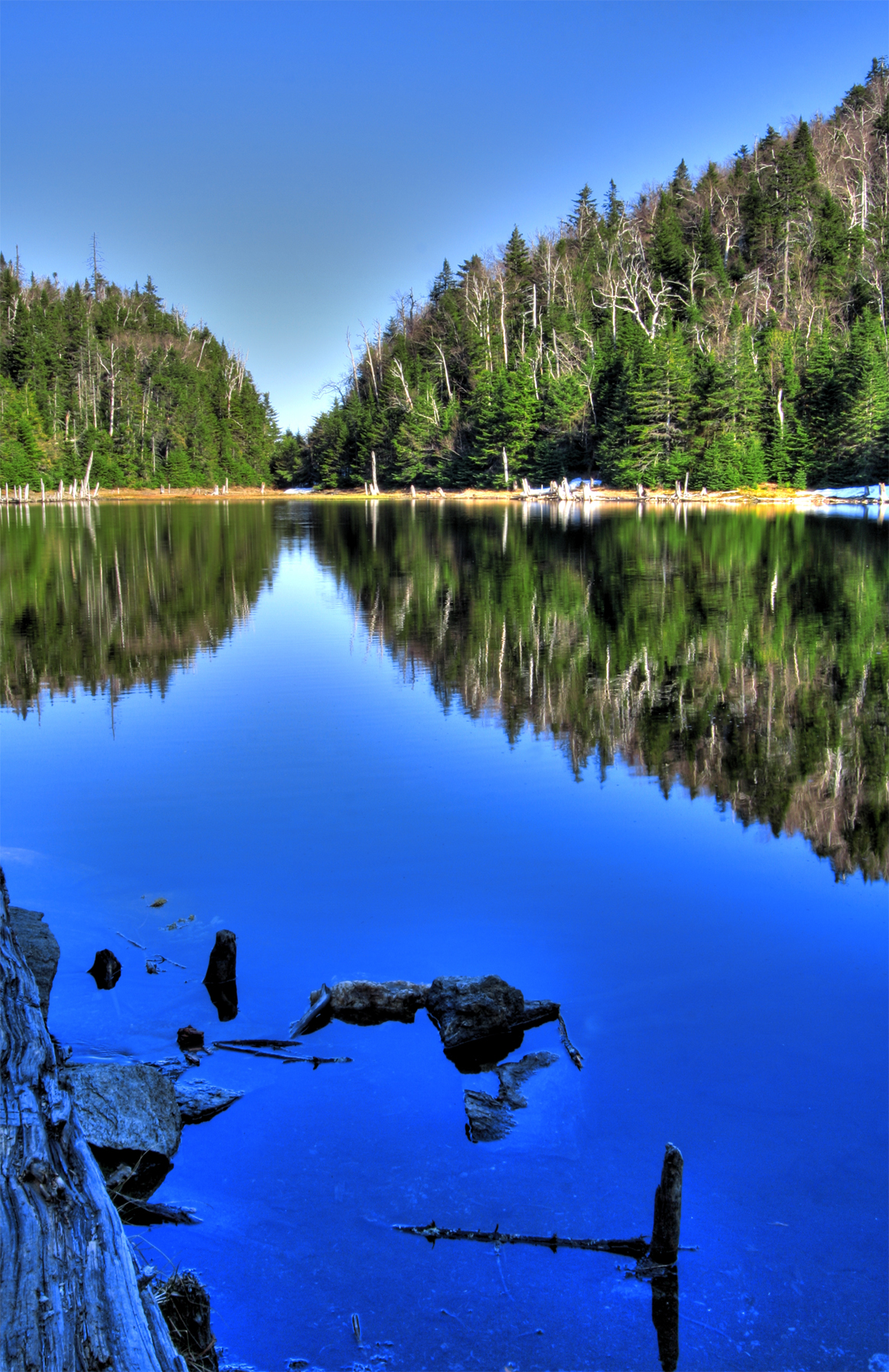 Lac spruce - hdr photo