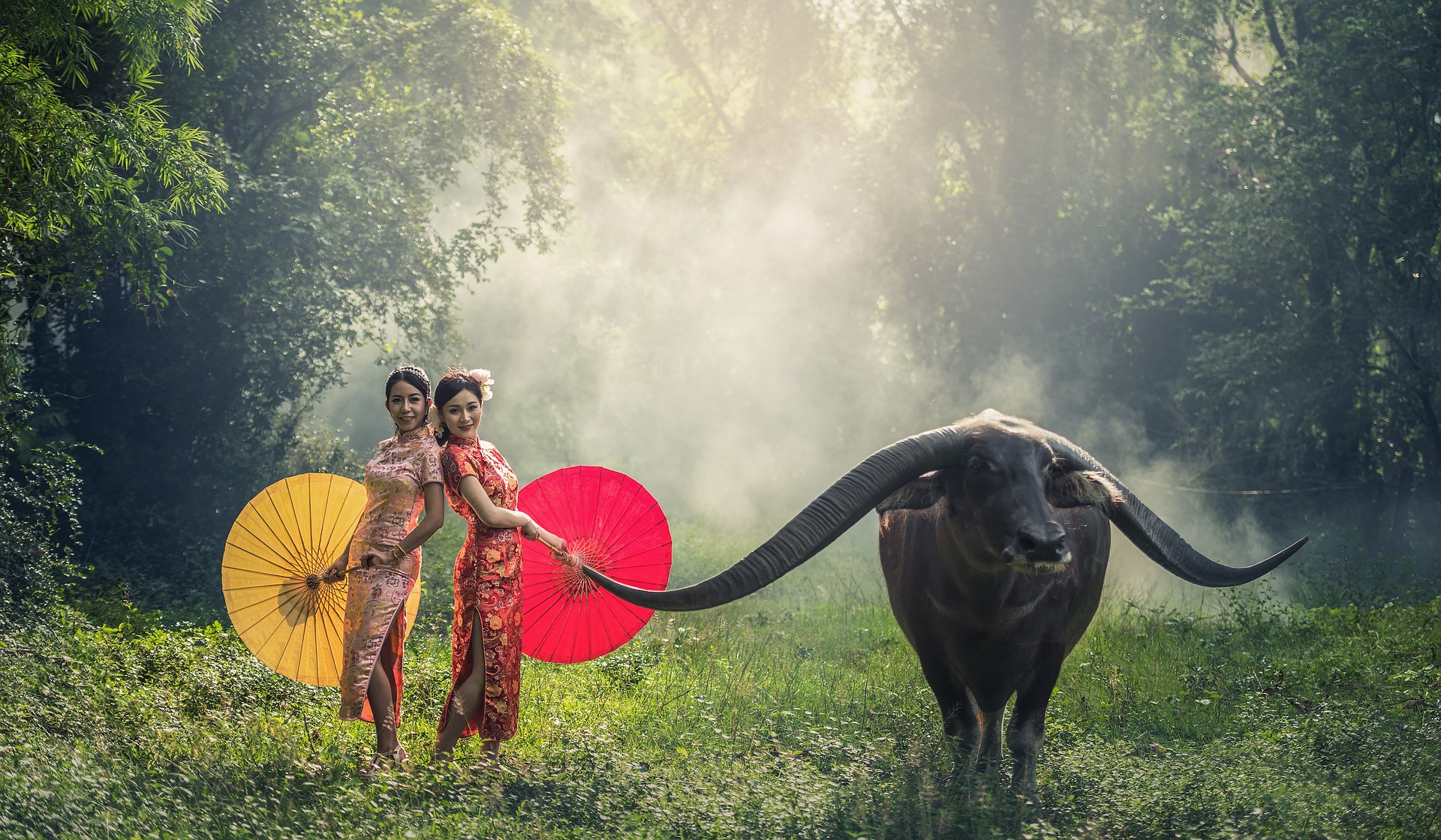 Ladies with the Cow, Activity, Animal, Buffalo, Cow, HQ Photo