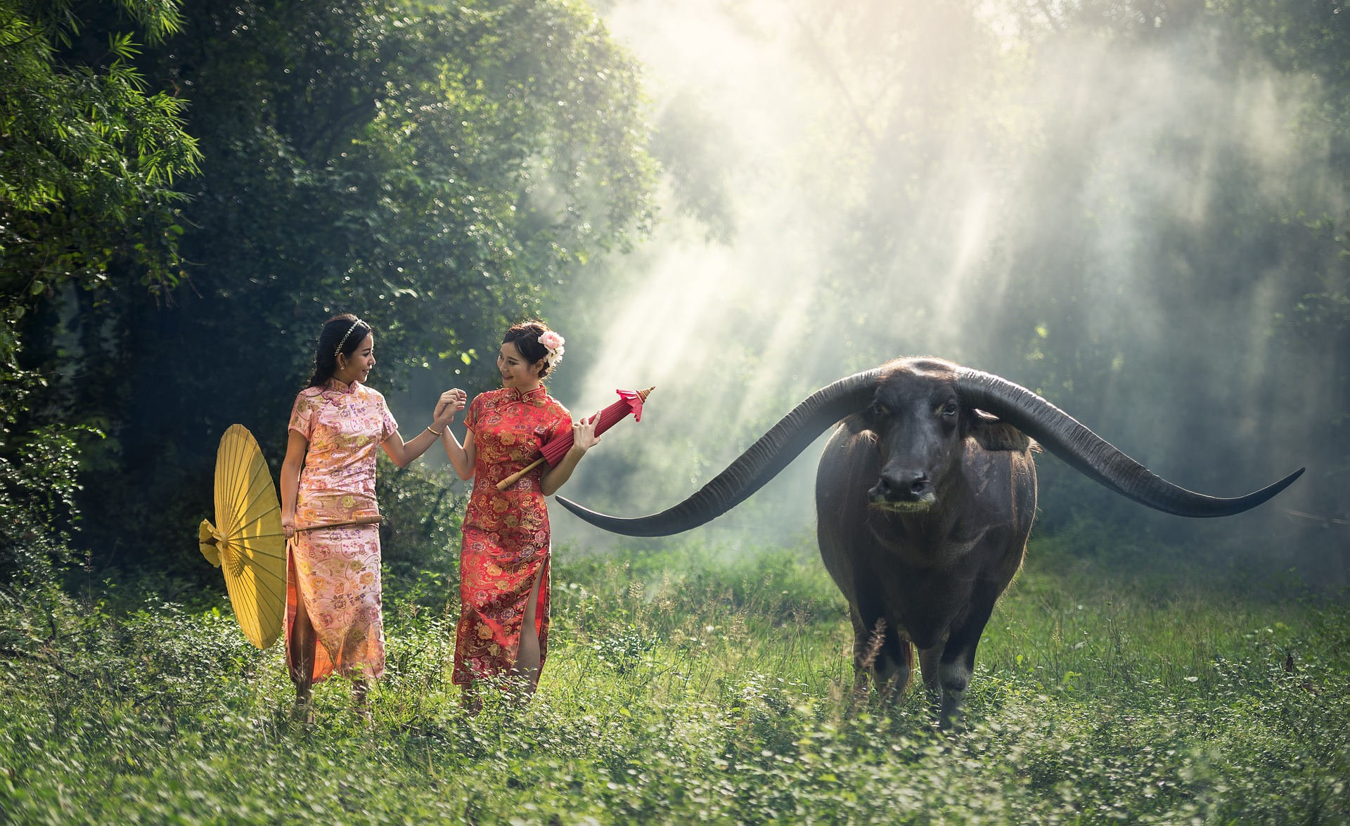 Ladies with wild buffalo photo