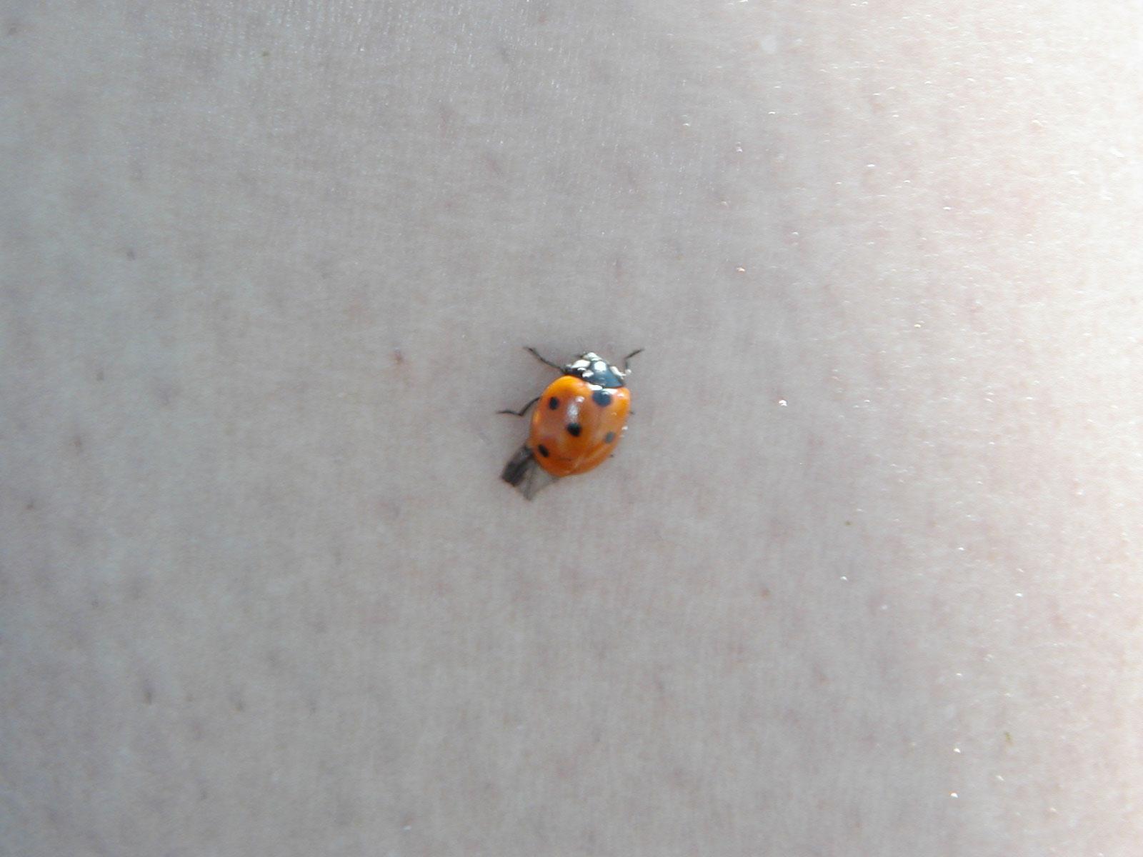 Lady bug photo