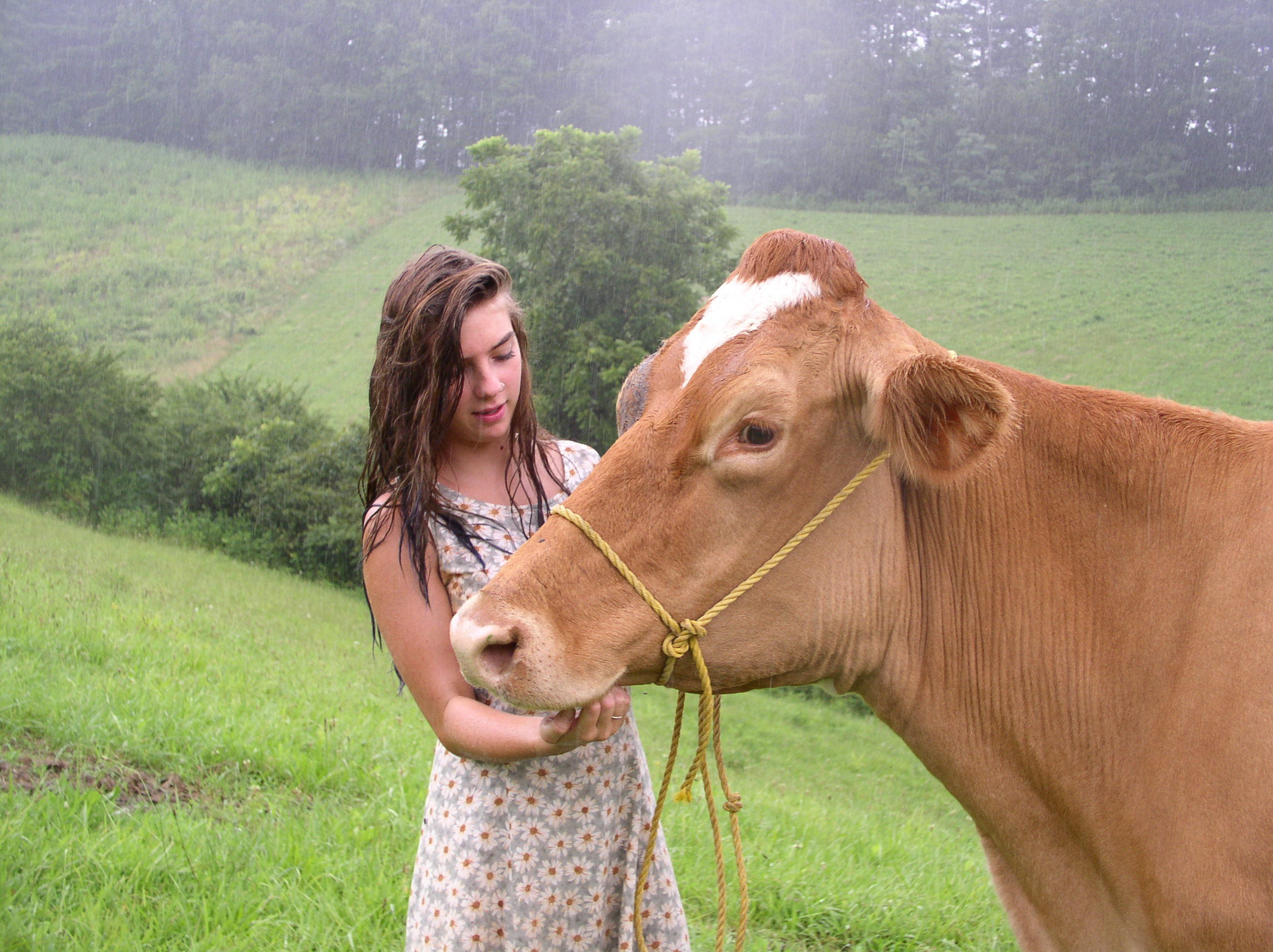Lady with cows photo