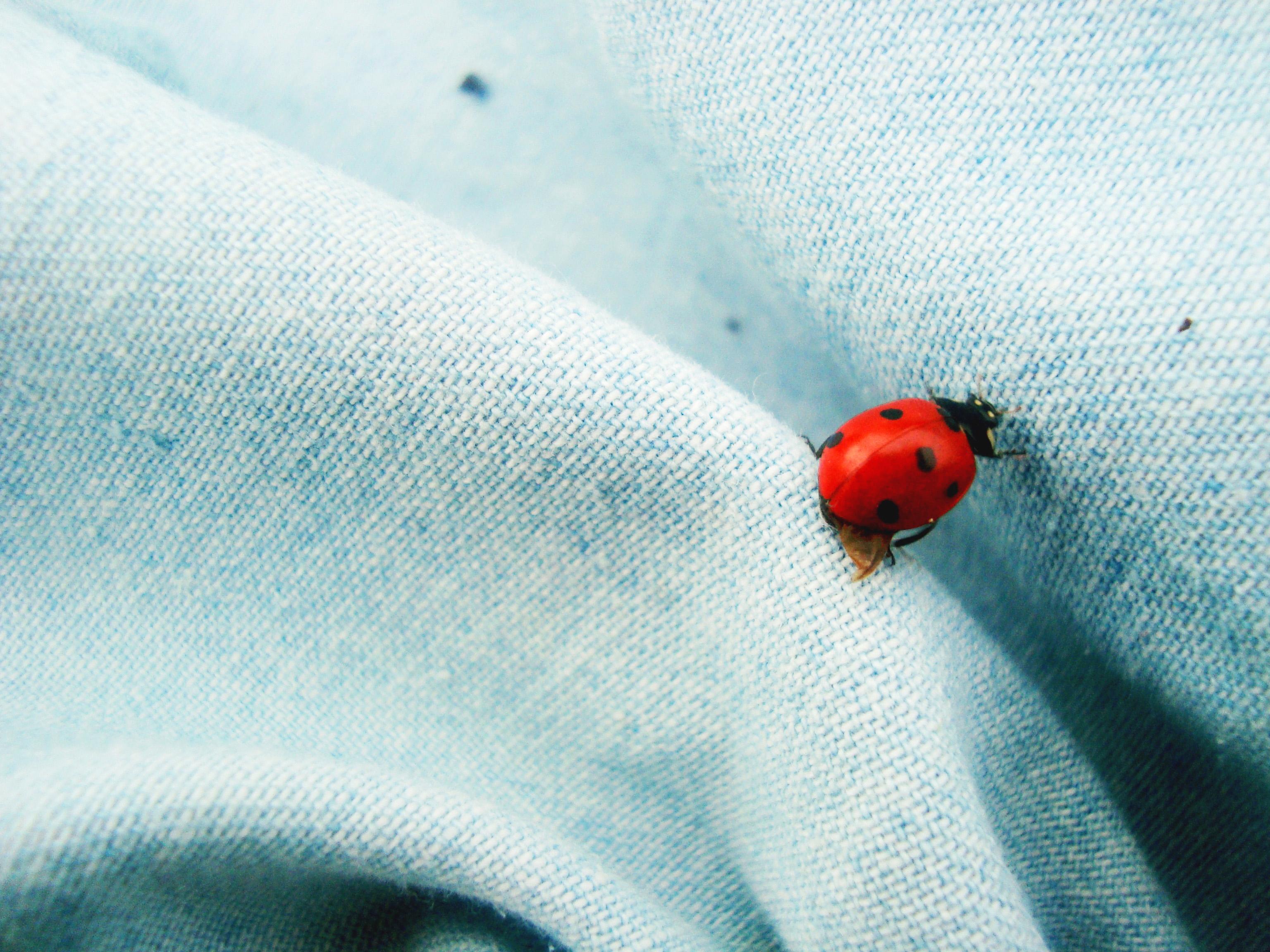 Ladybird photo