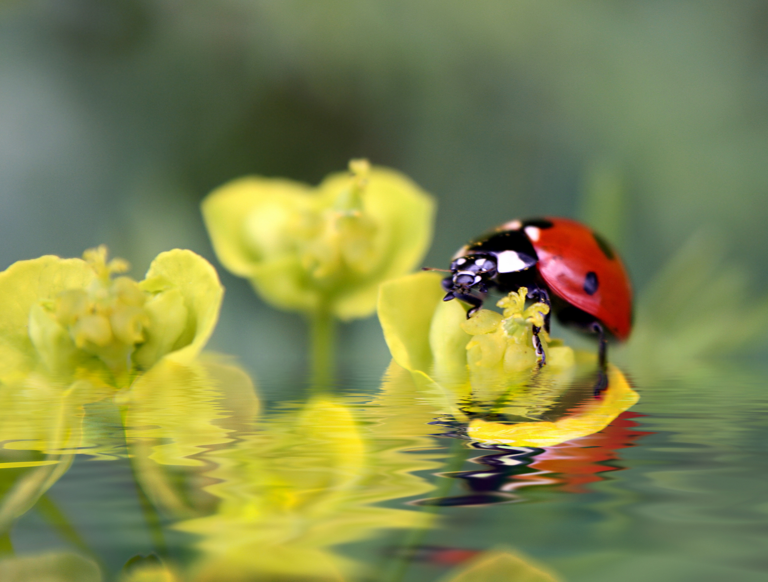 ladybug on flowers | Reflections in The WORD