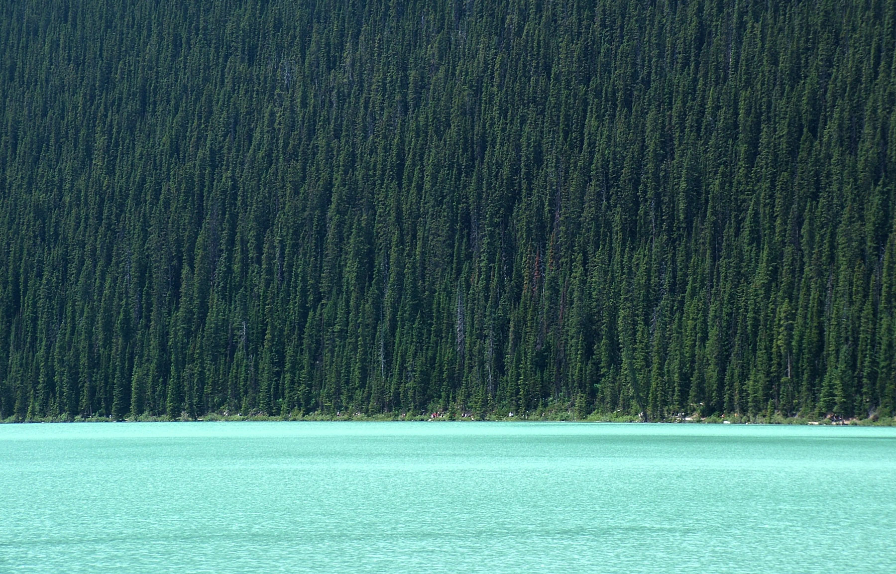 Lake Louise, Water, Woods, Trees, Canada, HQ Photo