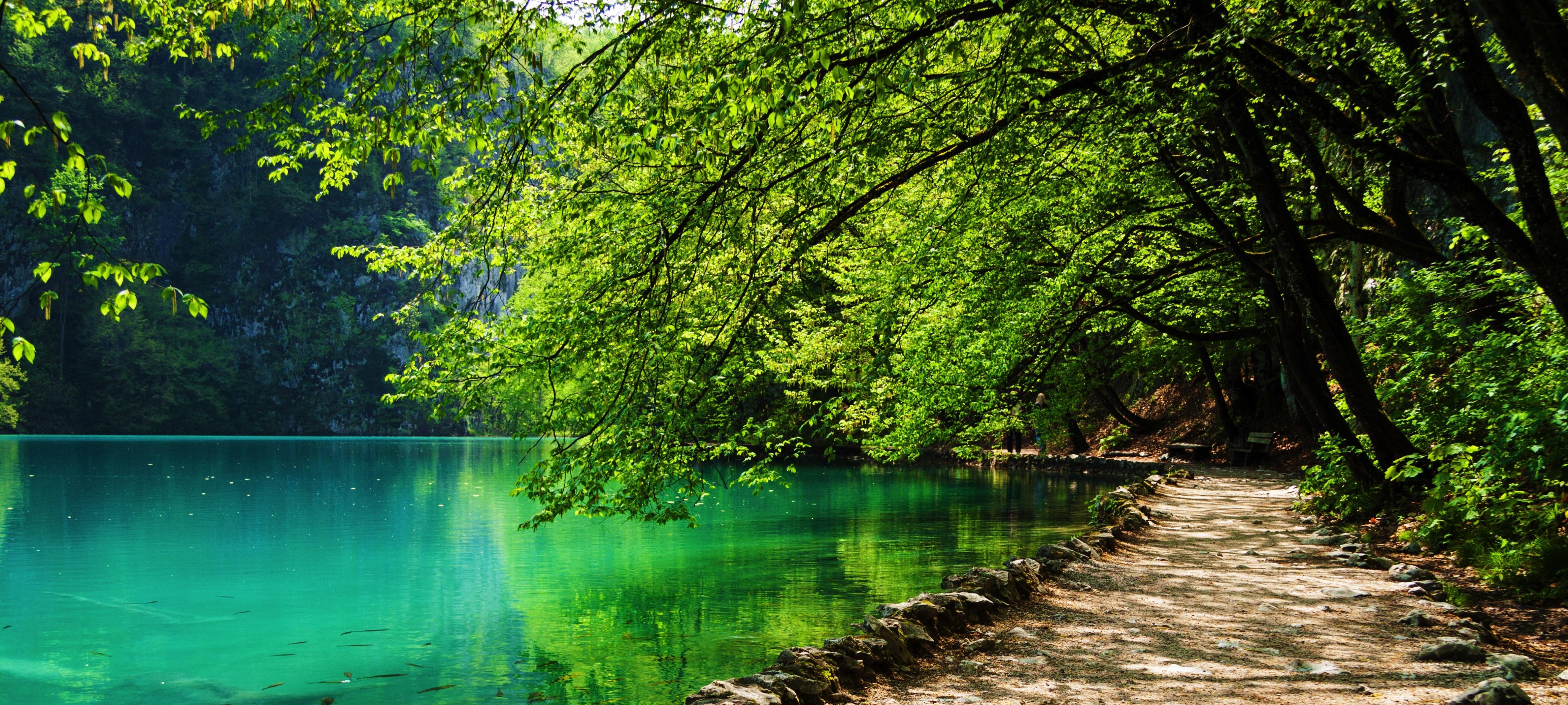 Path Near A Forest Lake | fotoPhox
