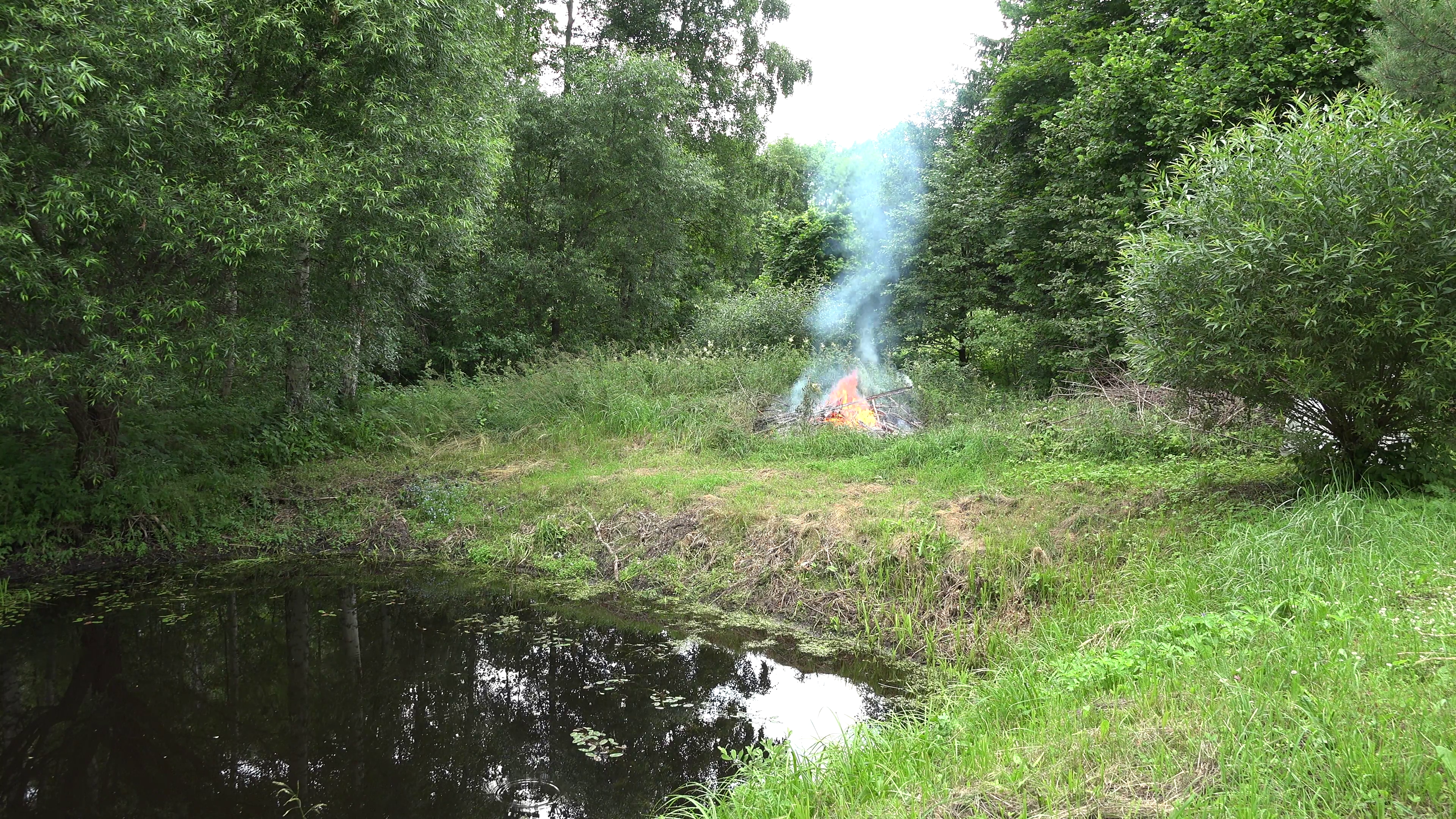 fire flames burn near forest trees on pond lake shore in summer. 4K ...