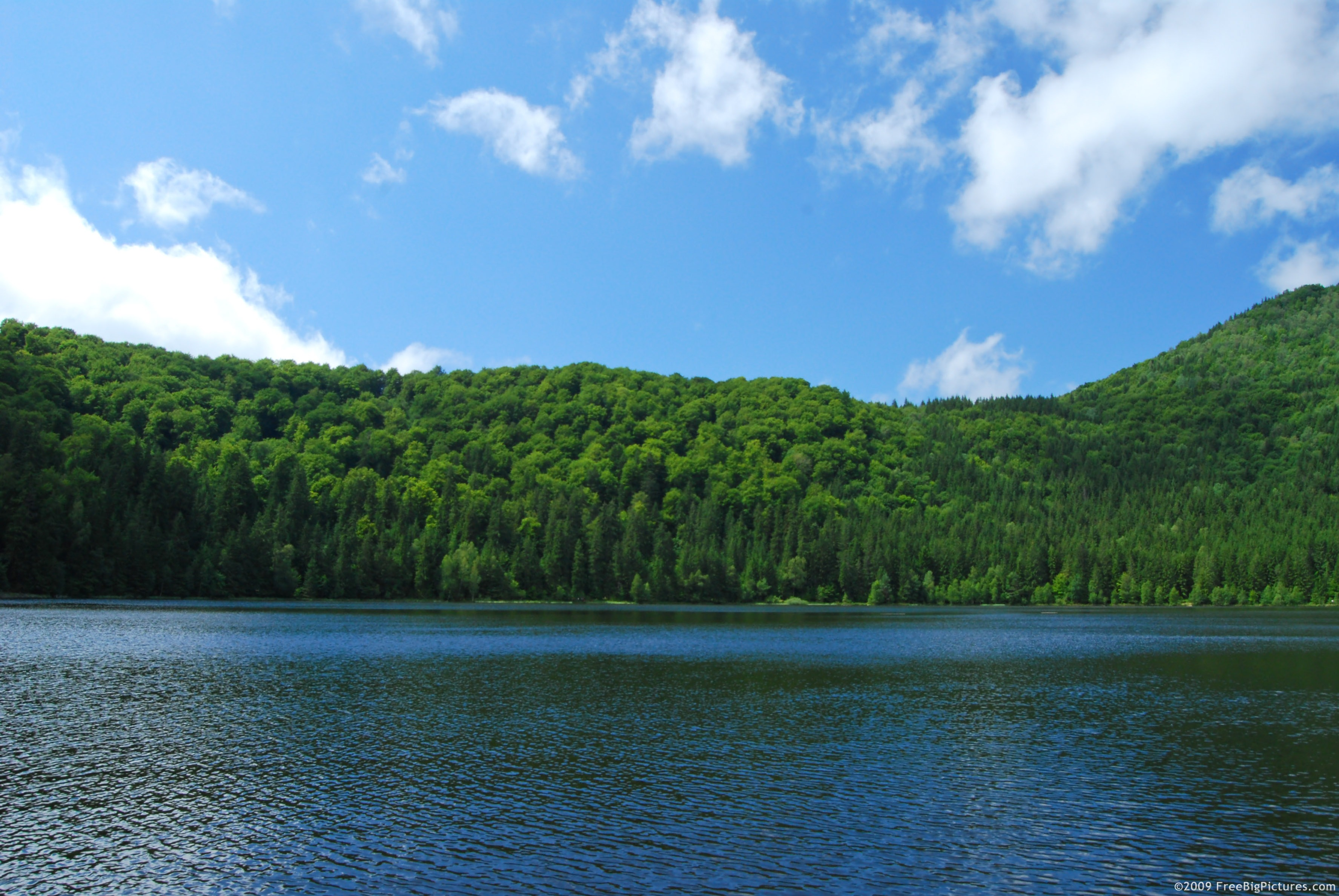 Forest: lake forest