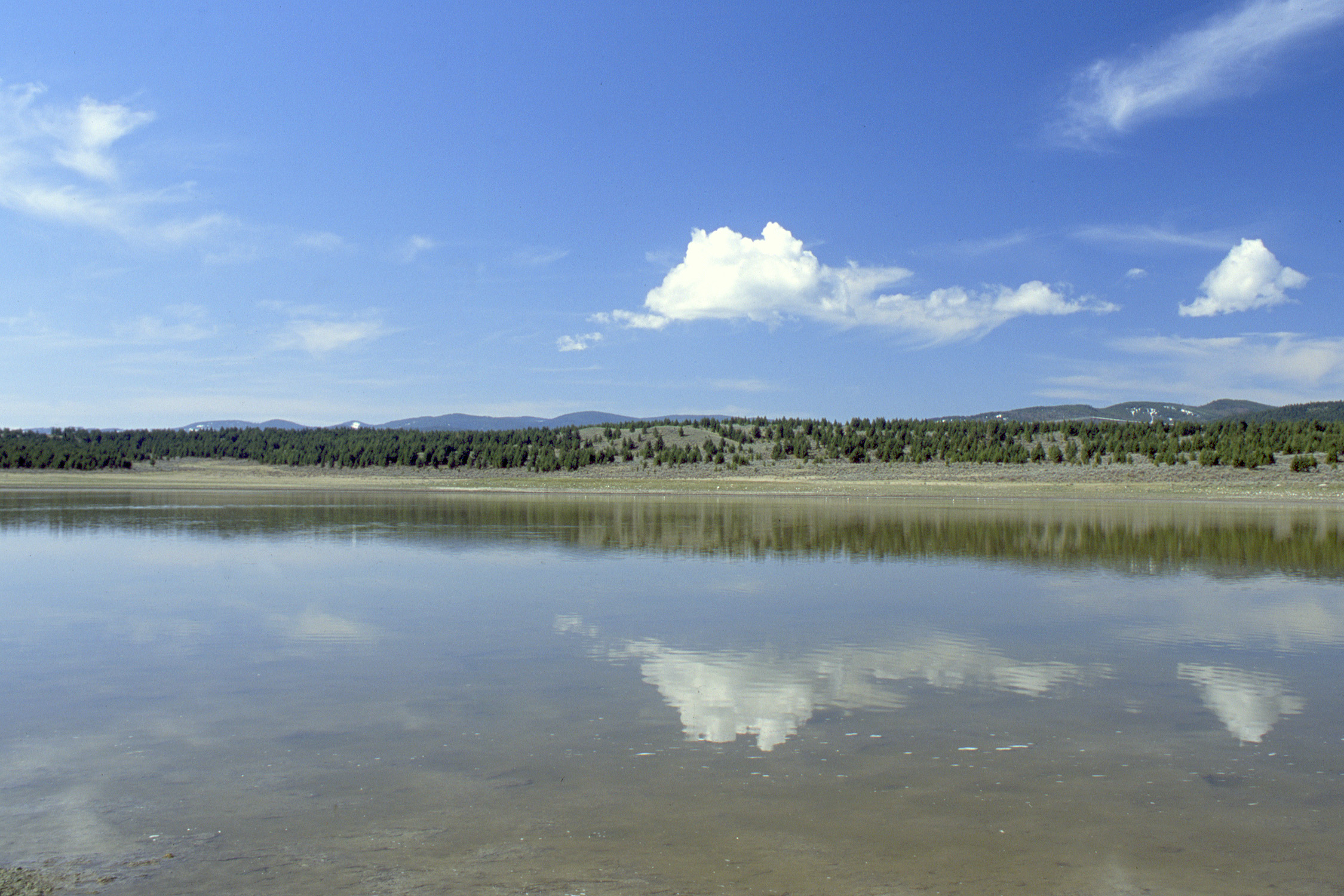 Wetlands and Ponds under the blue sky image - Free stock photo ...