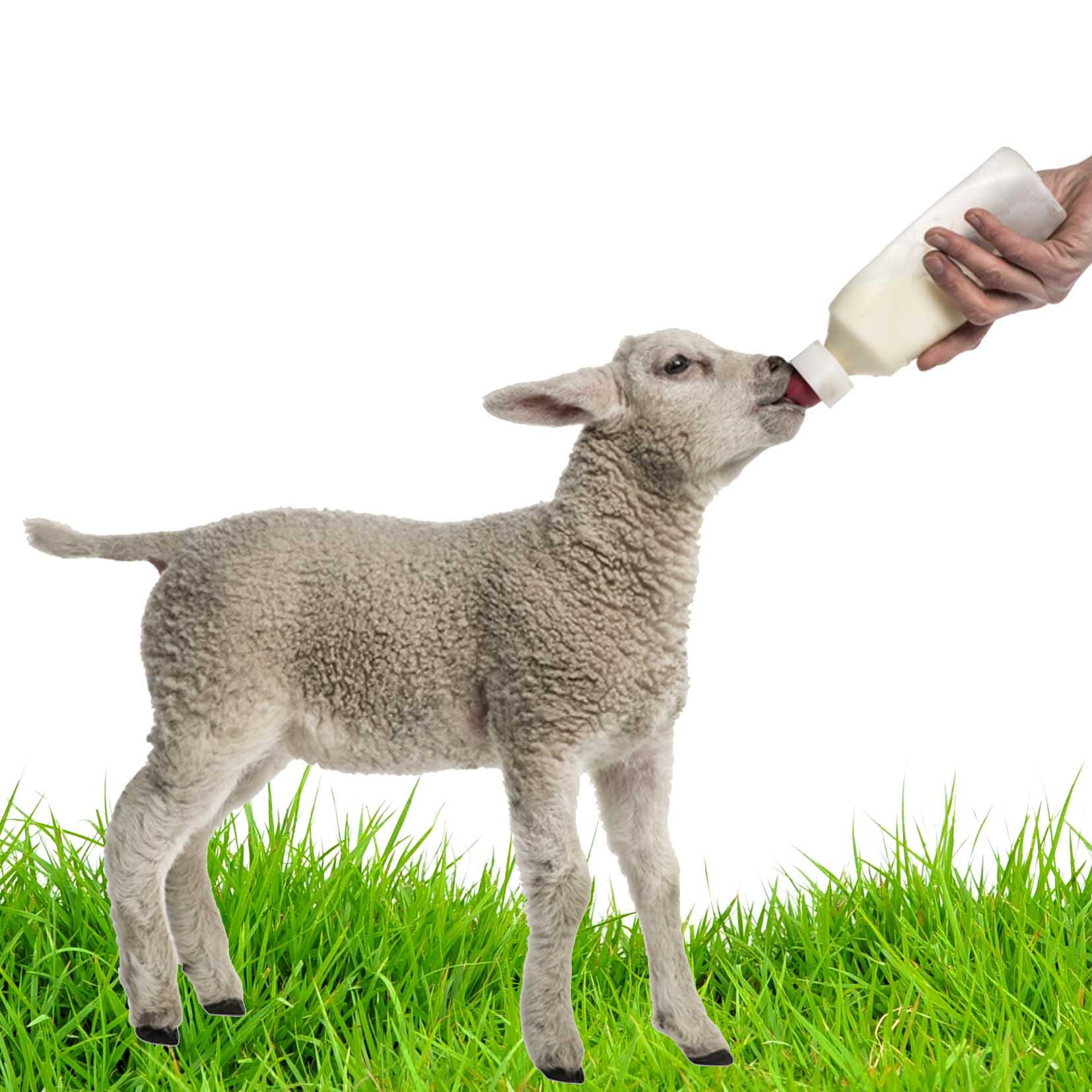 Feed The Lambs 2018 - Surrey Docks Farm London