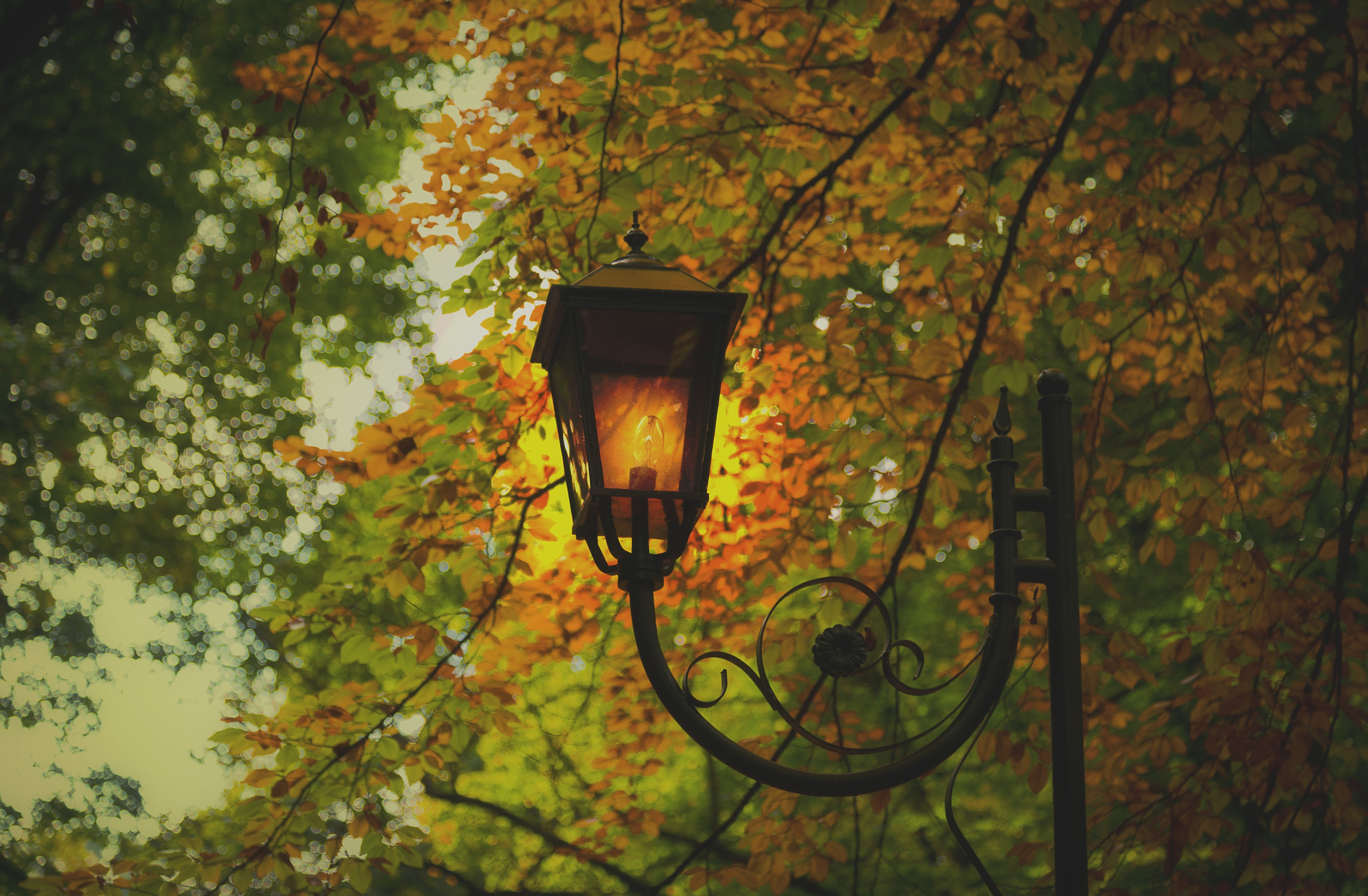 Misc: Lantern Autumn Park Trees Leaves Lamp Wallpaper for HD 16:9 ...
