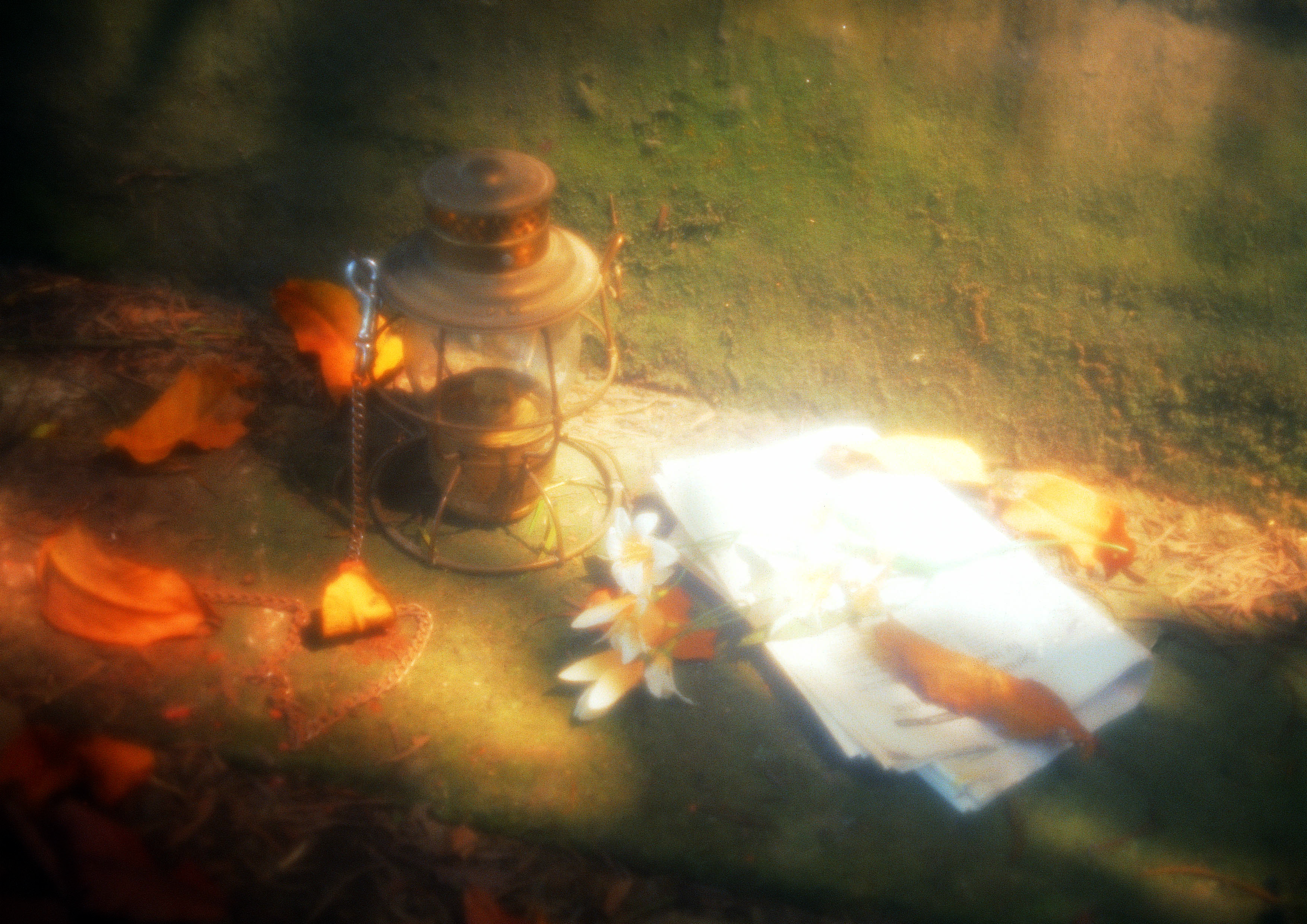 Lamp and leaves, Chain, Flowers, Grainy, Lamp, HQ Photo
