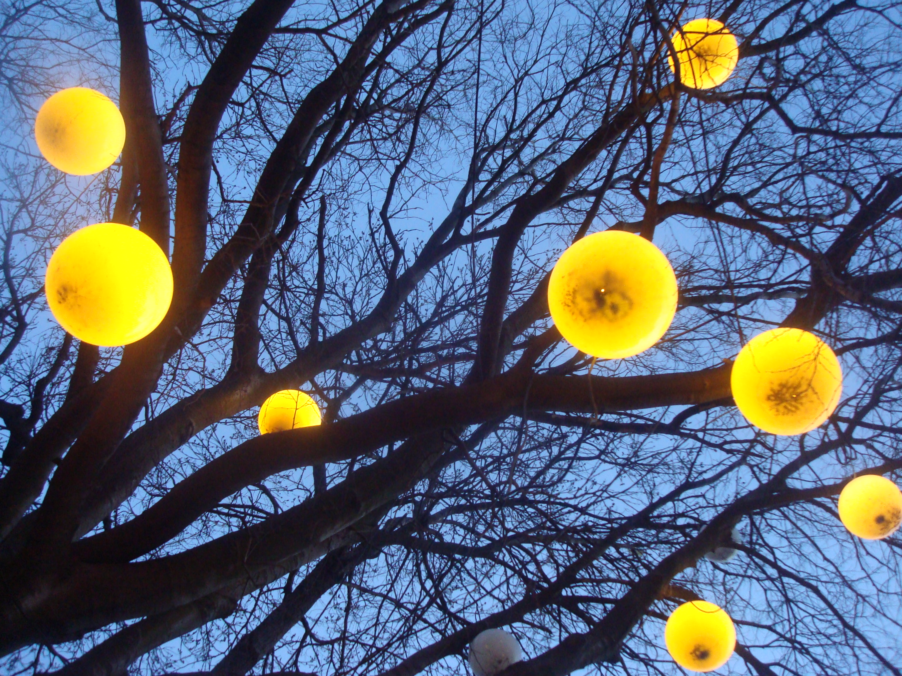 Lamps on a tree photo