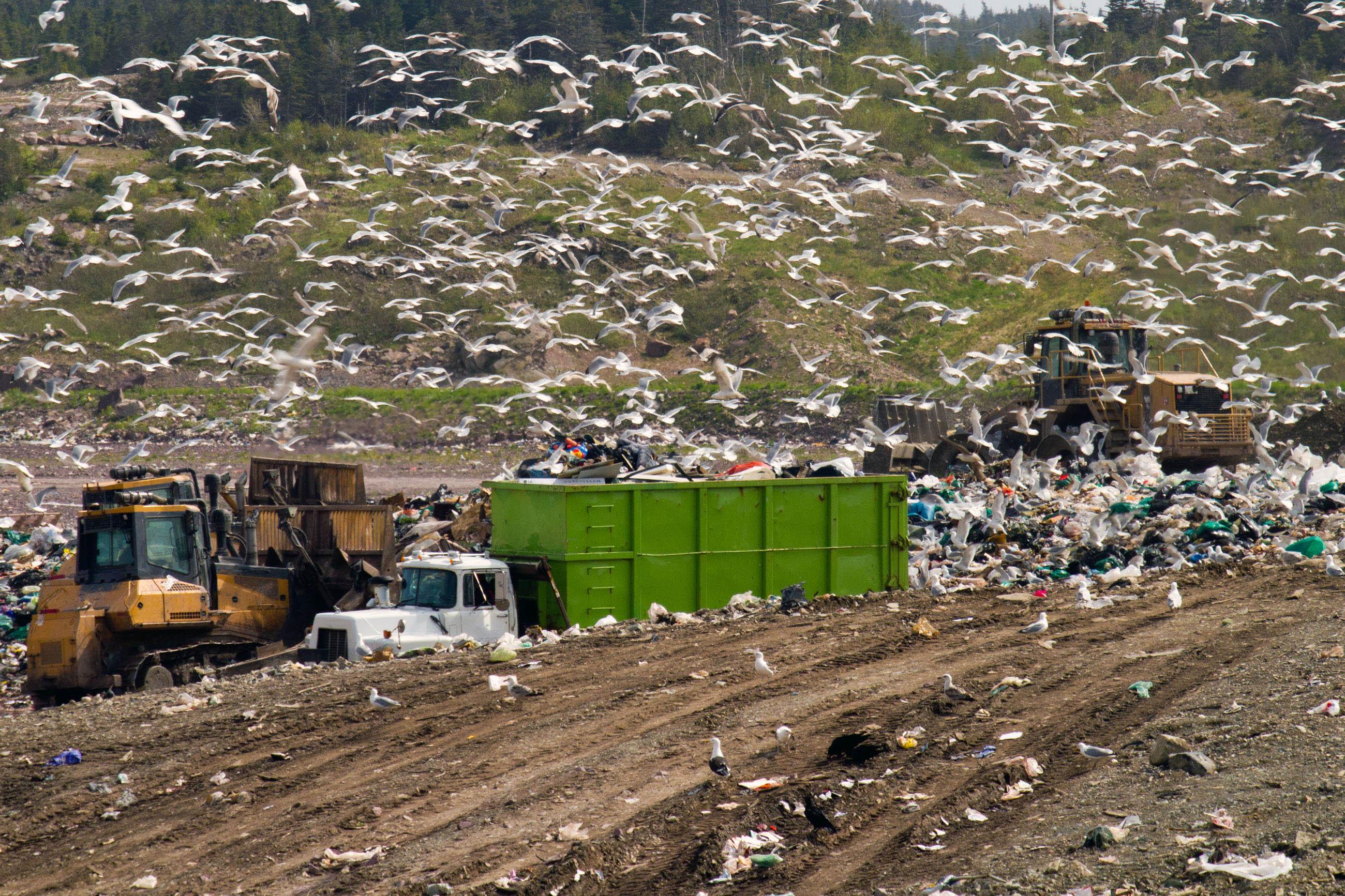 Landfill Equipment, Bulldozer, Outdoors, Wasteful, Waste, HQ Photo