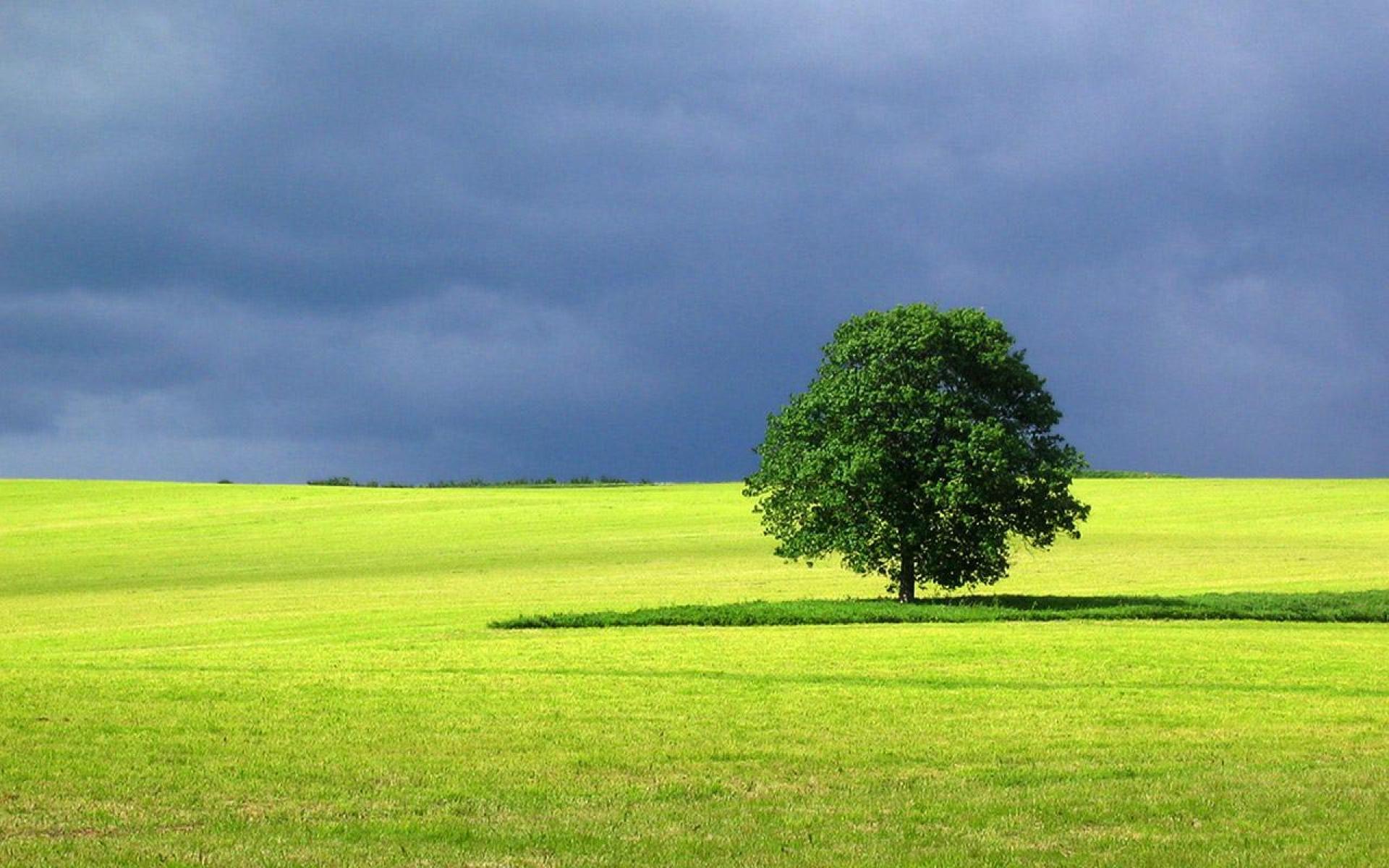 Landscape Tree Wallpaper | Customity