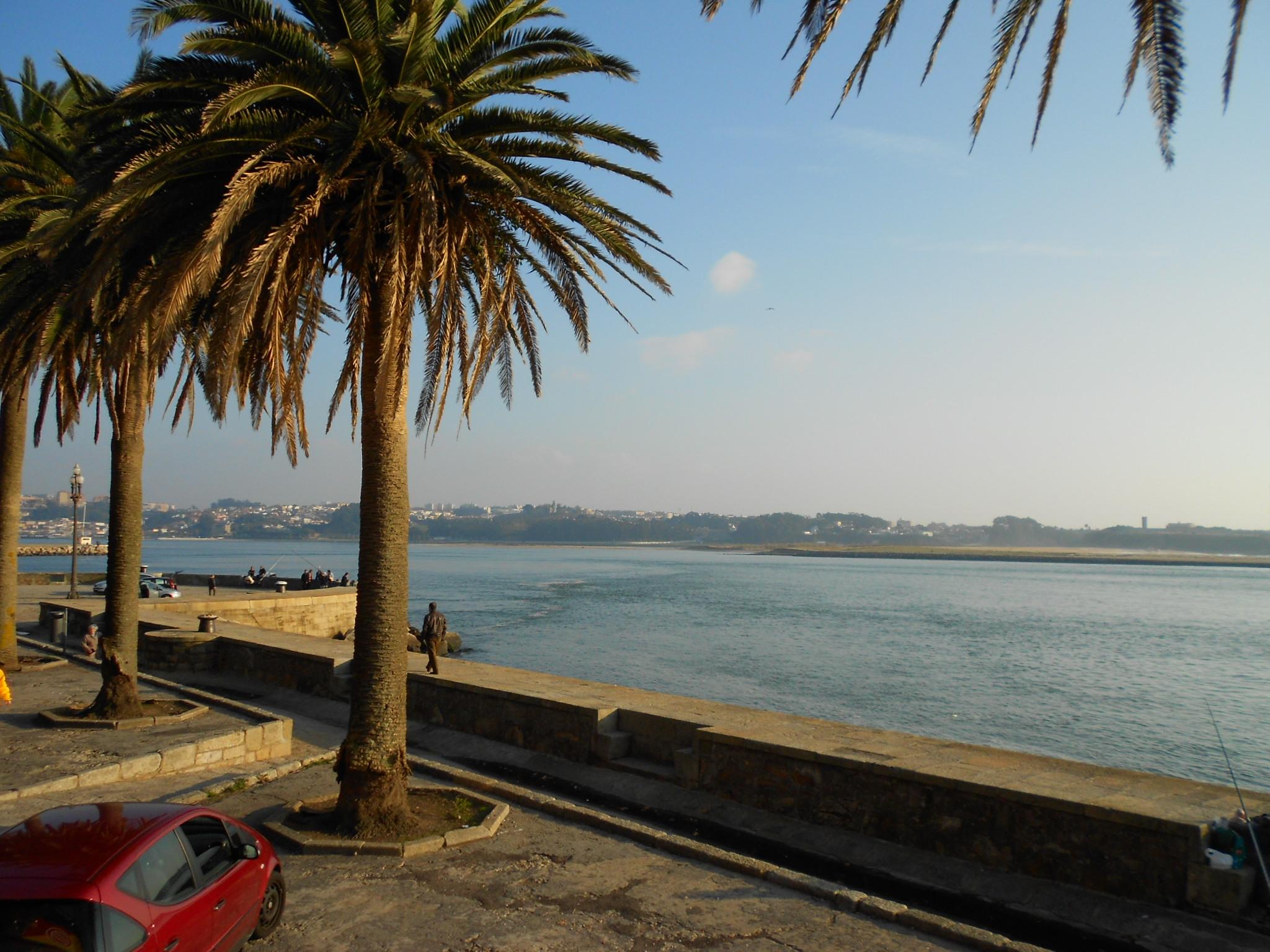 Landscape from sea, Landscape, Palms, Portugal, Sea, HQ Photo