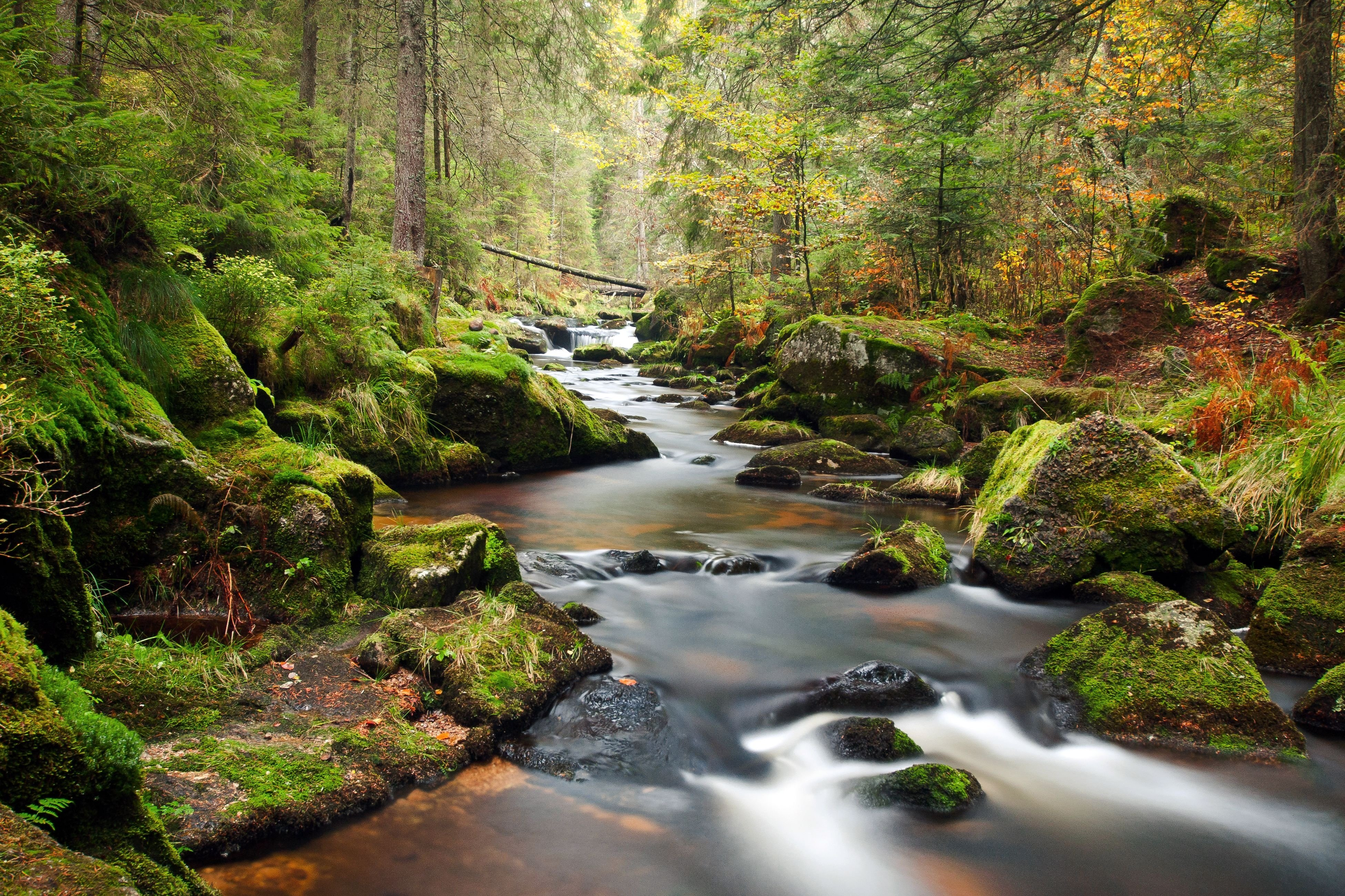 Forest River Background Wallpaper Hd Photos Rivers Nature For Pc ...