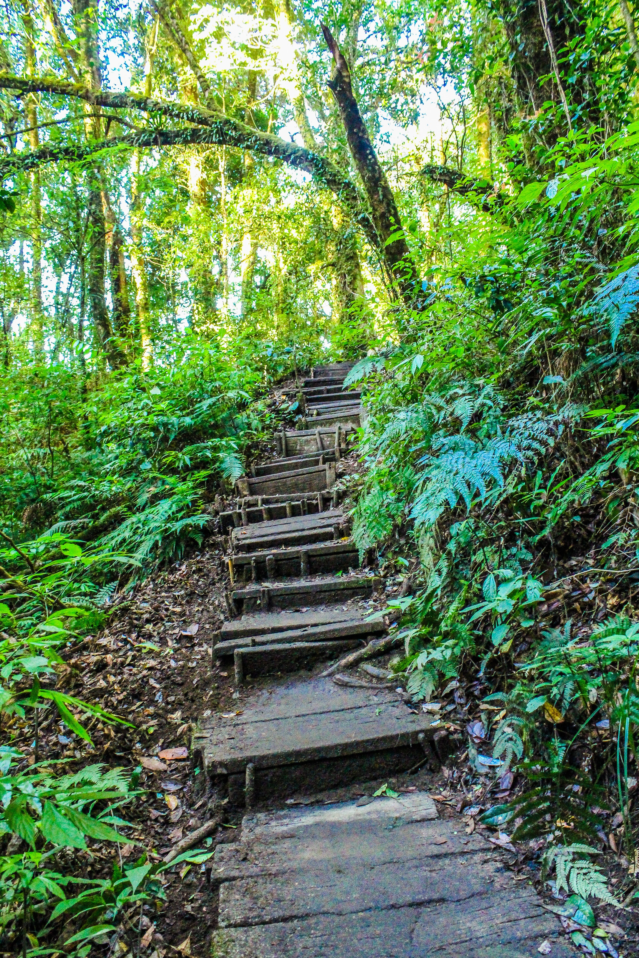 Landscape Photo of Stair in the Forest, Sunlight, Tourism, Summer, Trail, HQ Photo