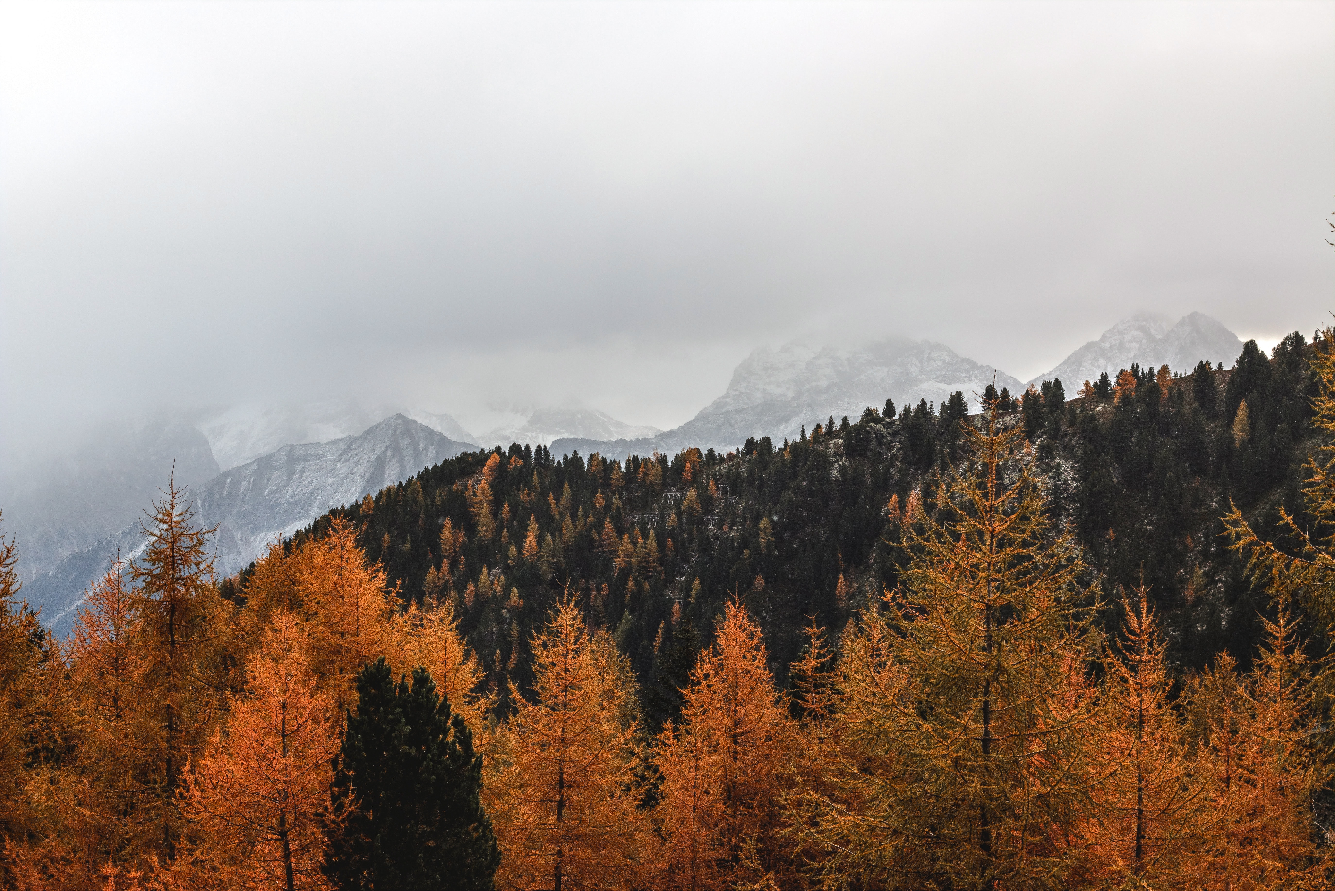 Landscape photography of brown pine trees