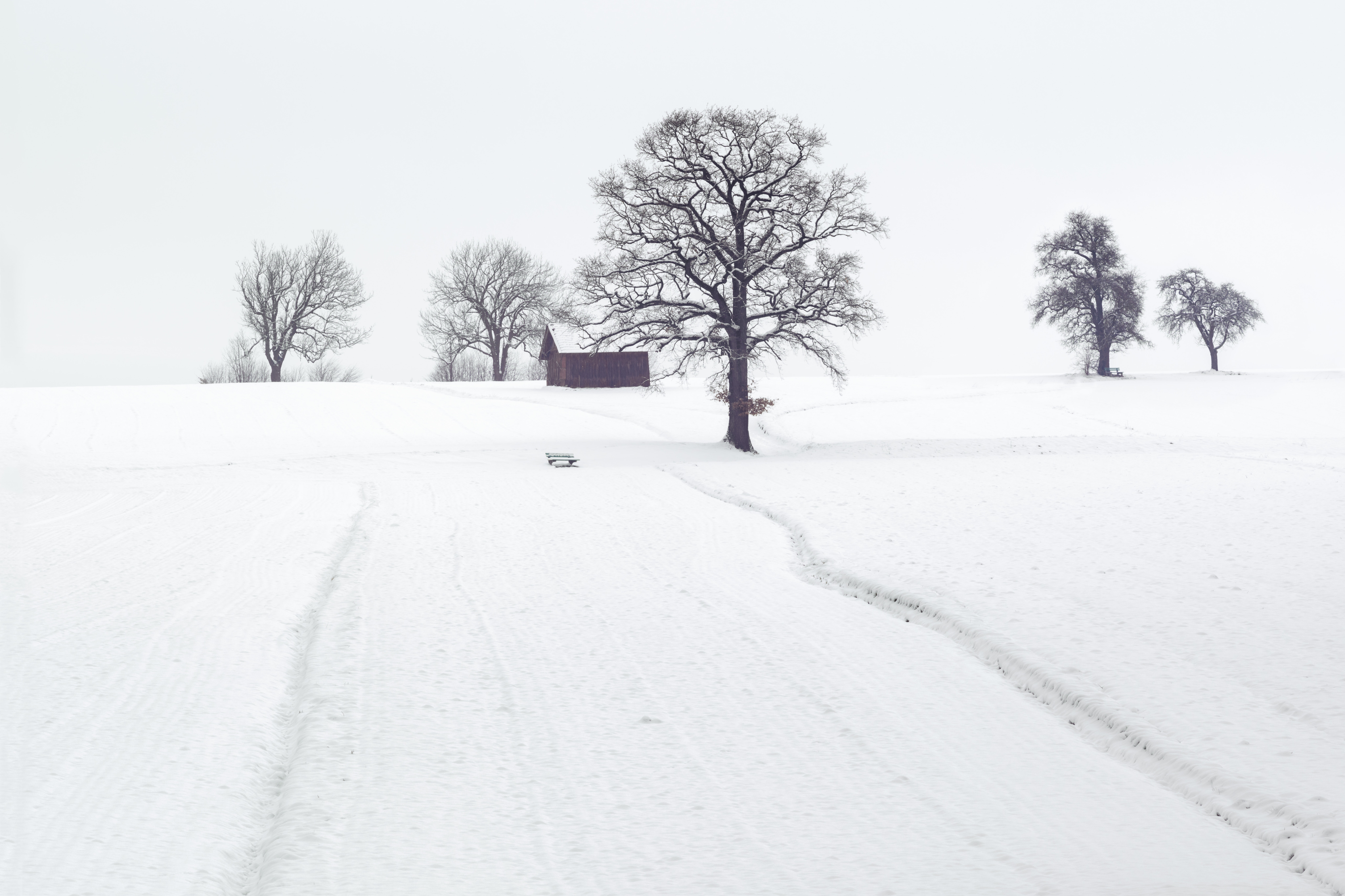 free photo landscape photography of dried trees on snow